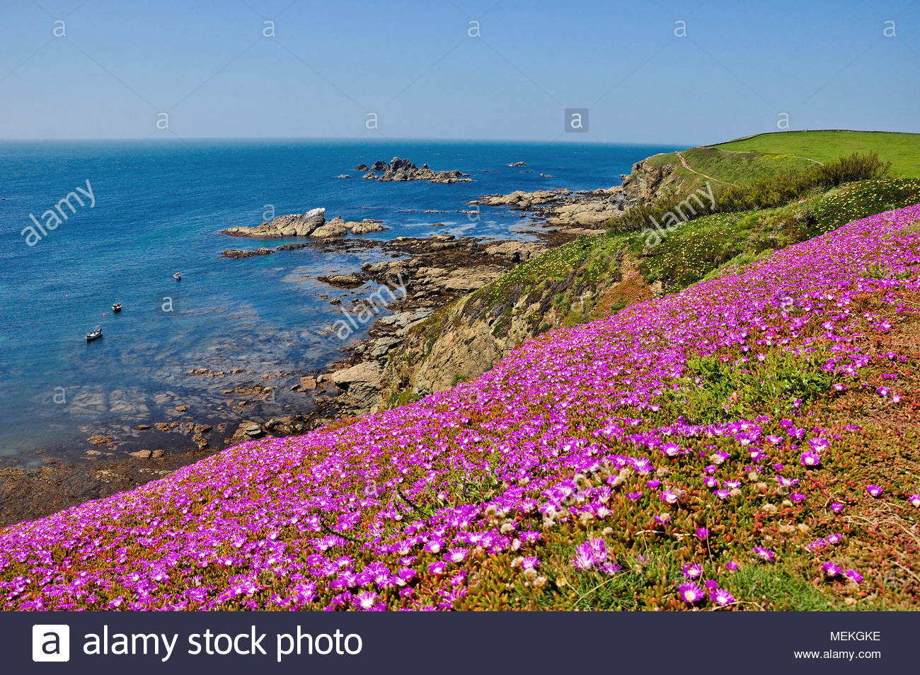 Pink Flowers Coastal Stock Photos Pink Flowers Coastal Stock