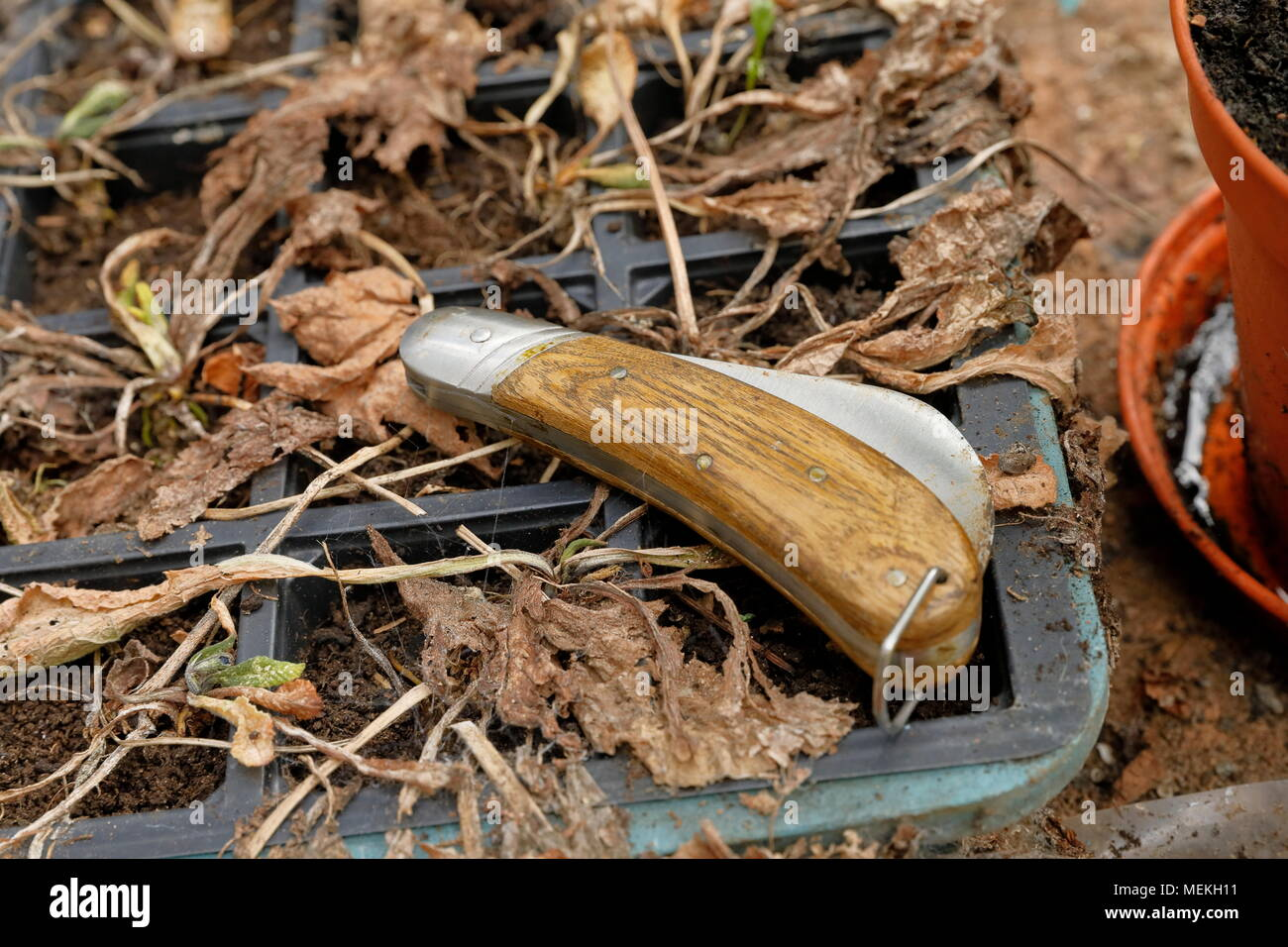 Pruning Knife Stock Photos & Pruning Knife Stock Images - Alamy