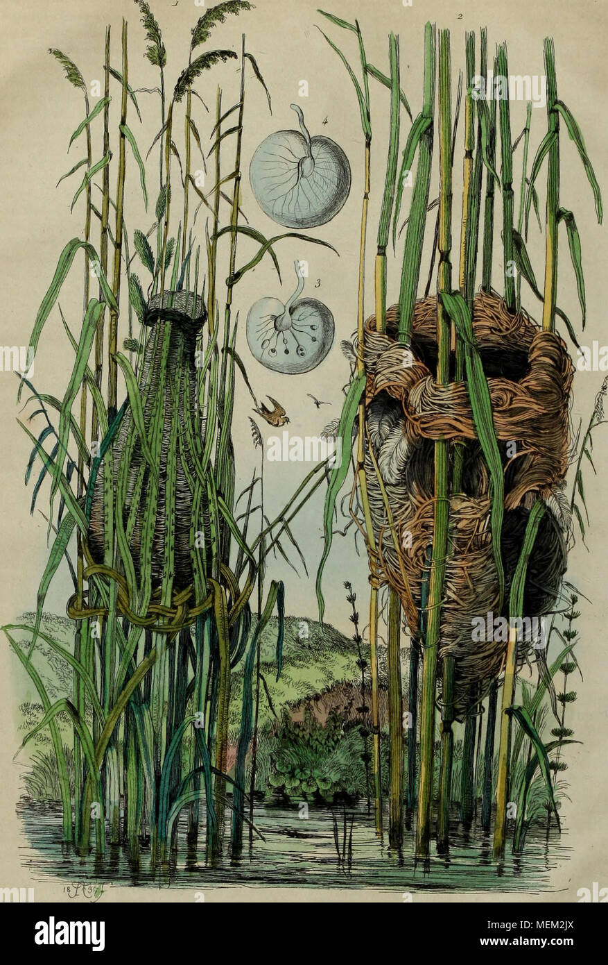 . Dictionnaire pittoresque d'histoire naturelle et des phénomènes de la nature . Nids de Fauvettes 1. K, CuCLco/e, a F Roiuserole. - Stock Image