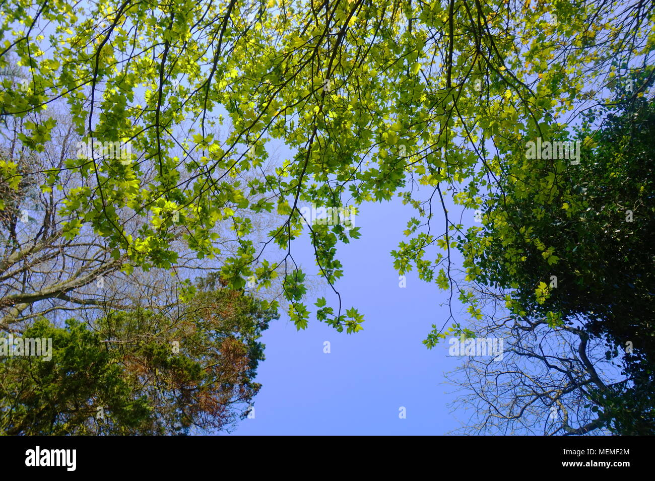 A worm's eye of view. Simple background with different colour greens set against a backdrop of a blue sky. - Stock Image