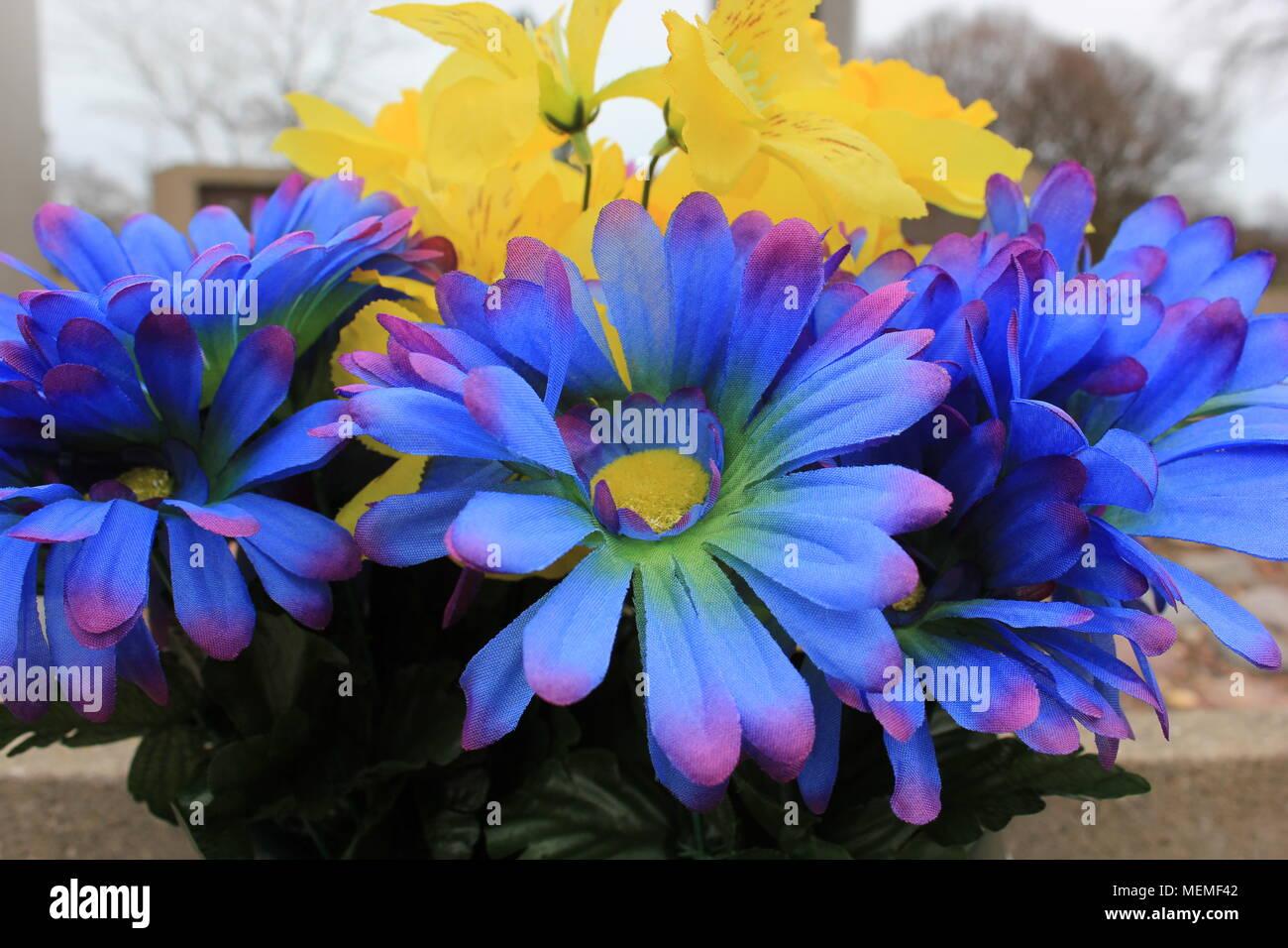 Bunch Of Everlasting Flowers Stock Photos Bunch Of Everlasting