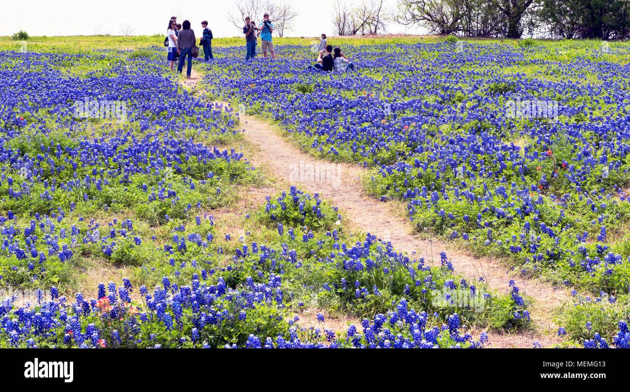 Ennis Texas April 19 2018 Ennis Texas Springtime Bluebonnet