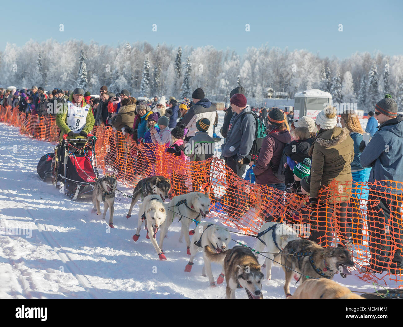 Musher Linwood Fiedler at the restart of the Iditarod in Willow Alaska - Stock Image