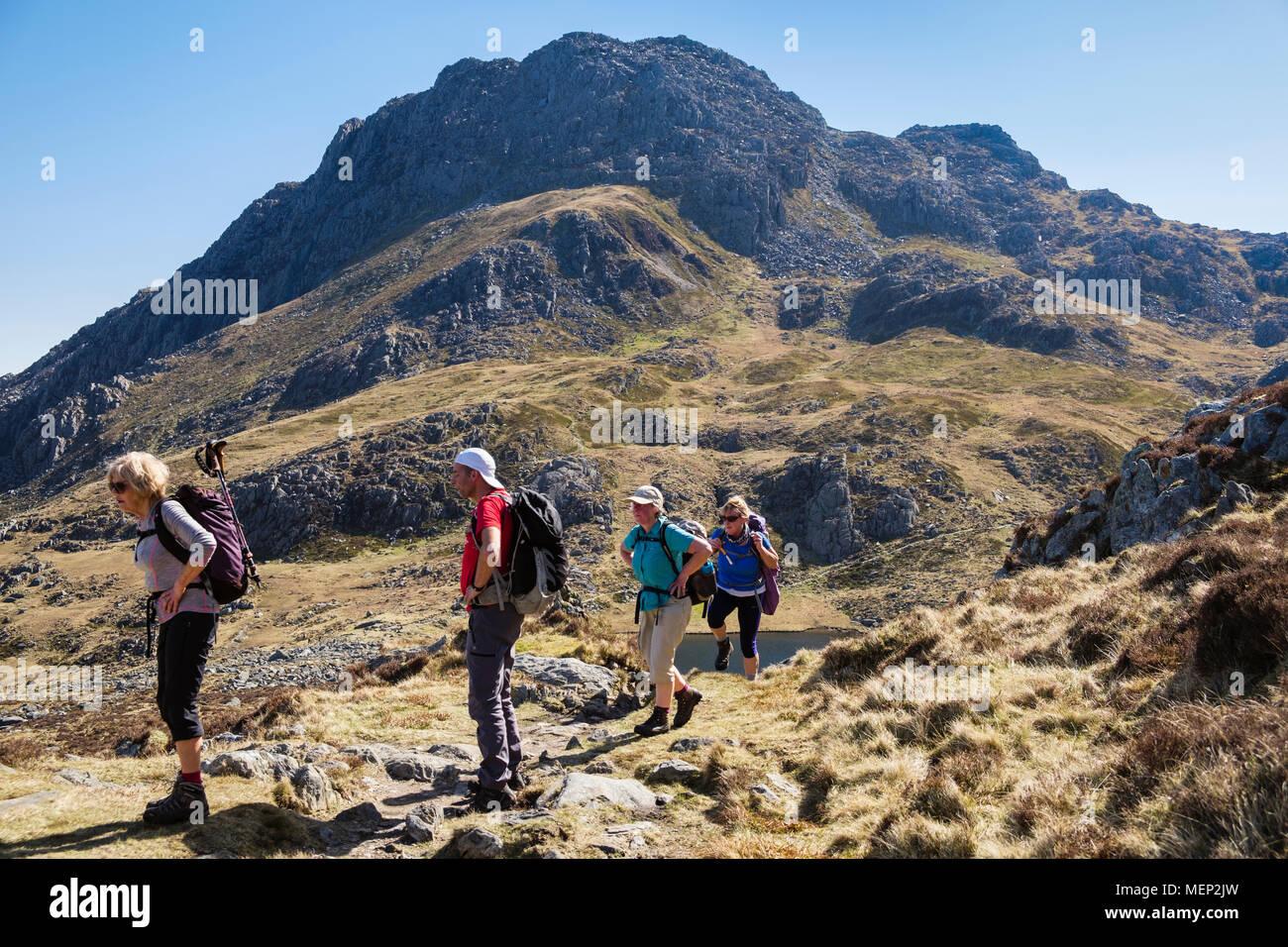 Hikers hiking on Y Gribin ridge with Tryfan mountain peak across Cwm Bochlwyd in mountains of Snowdonia National Park. Ogwen Wales UK Britain - Stock Image