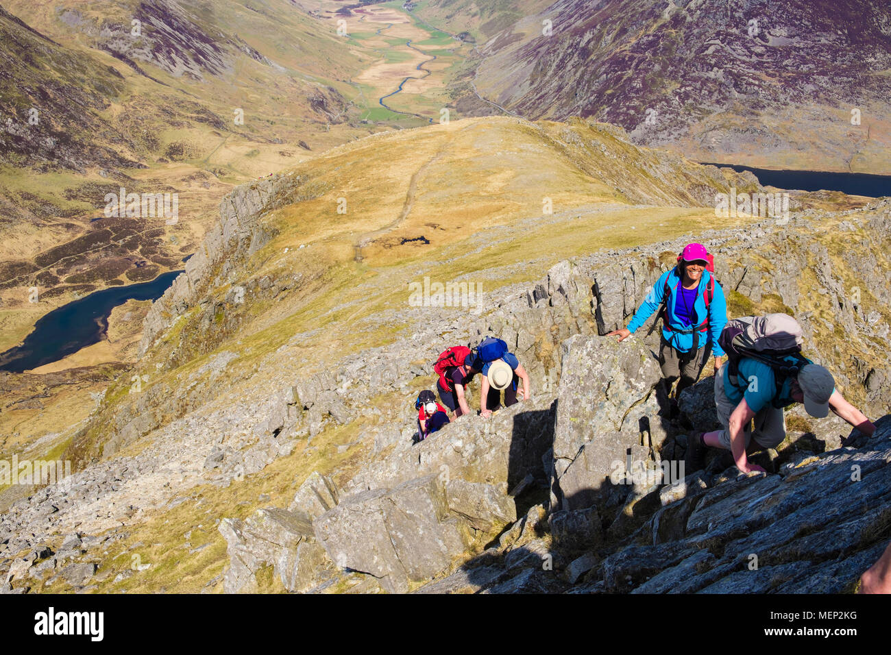 Hikers scrambling up Y Gribin ridge route to Glyder Fach in mountains of Snowdonia National Park. Ogwen, Conwy, Wales, UK, Britain - Stock Image
