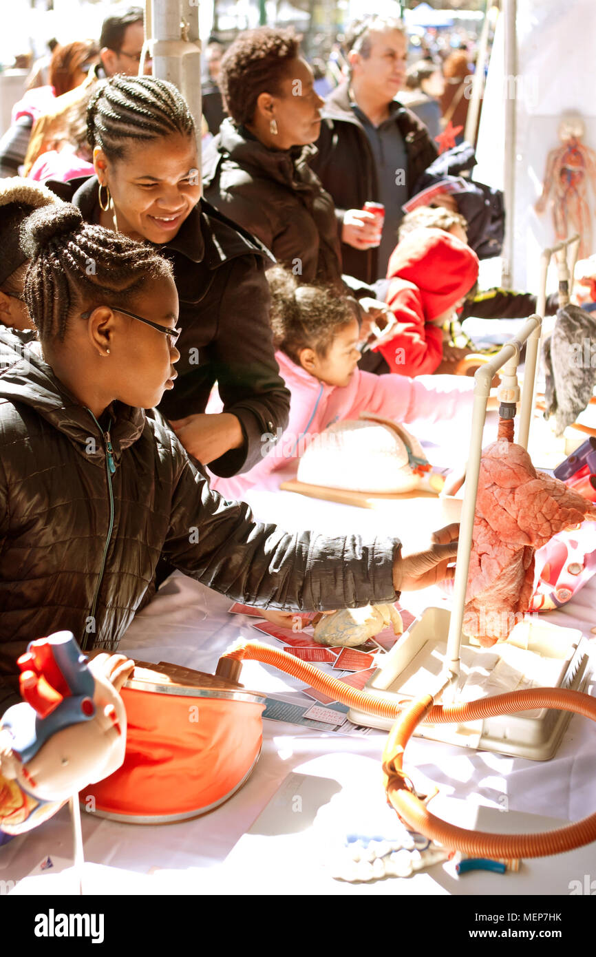Students touch a human lung to see how it works at a biology display at the Atlanta Science Fair in Centennial Park on March 28, 2015 in Atlanta, GA. - Stock Image