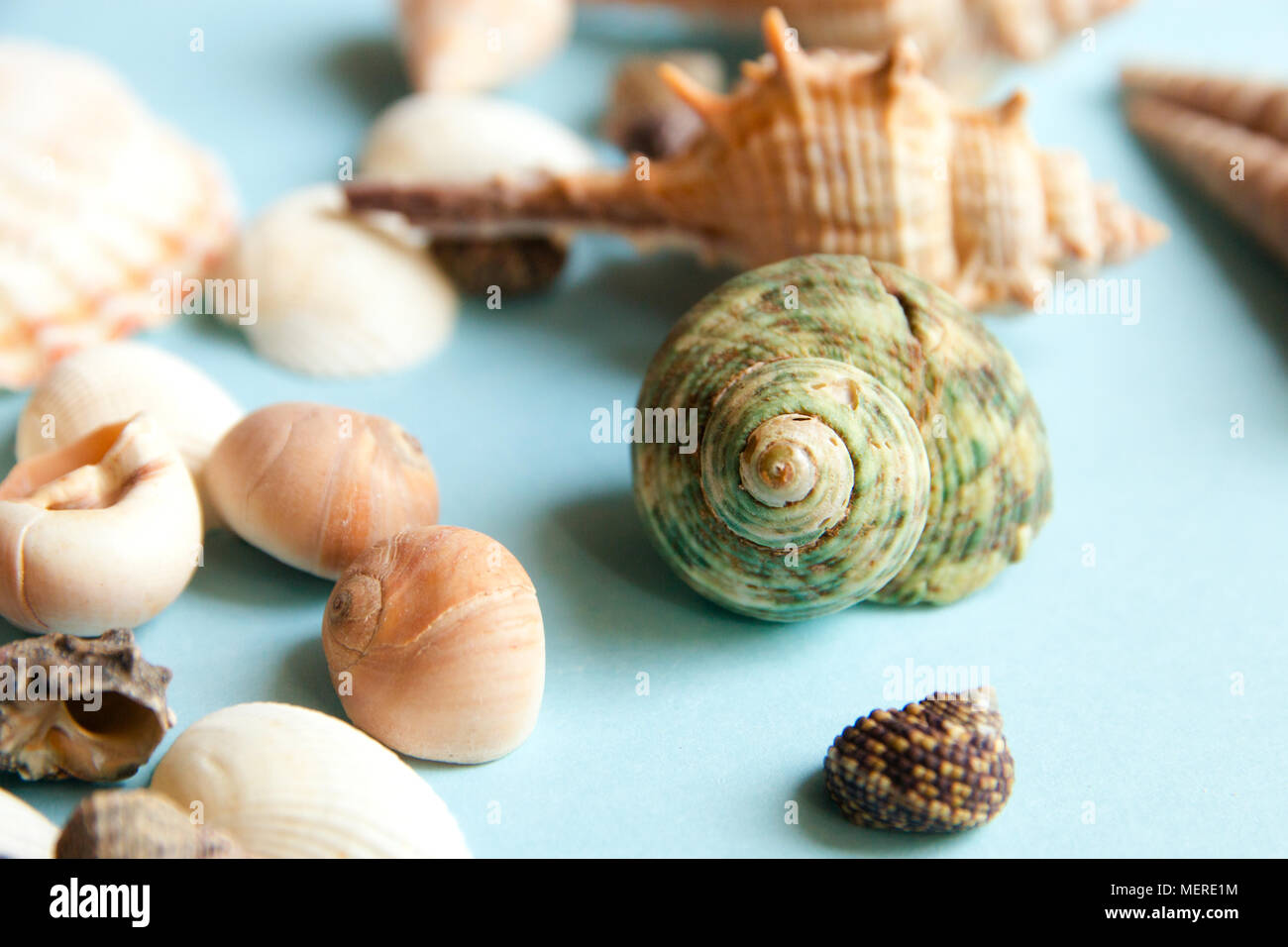 Seashells flat lay pattern on blue background, sea vacation background, top view - Stock Image