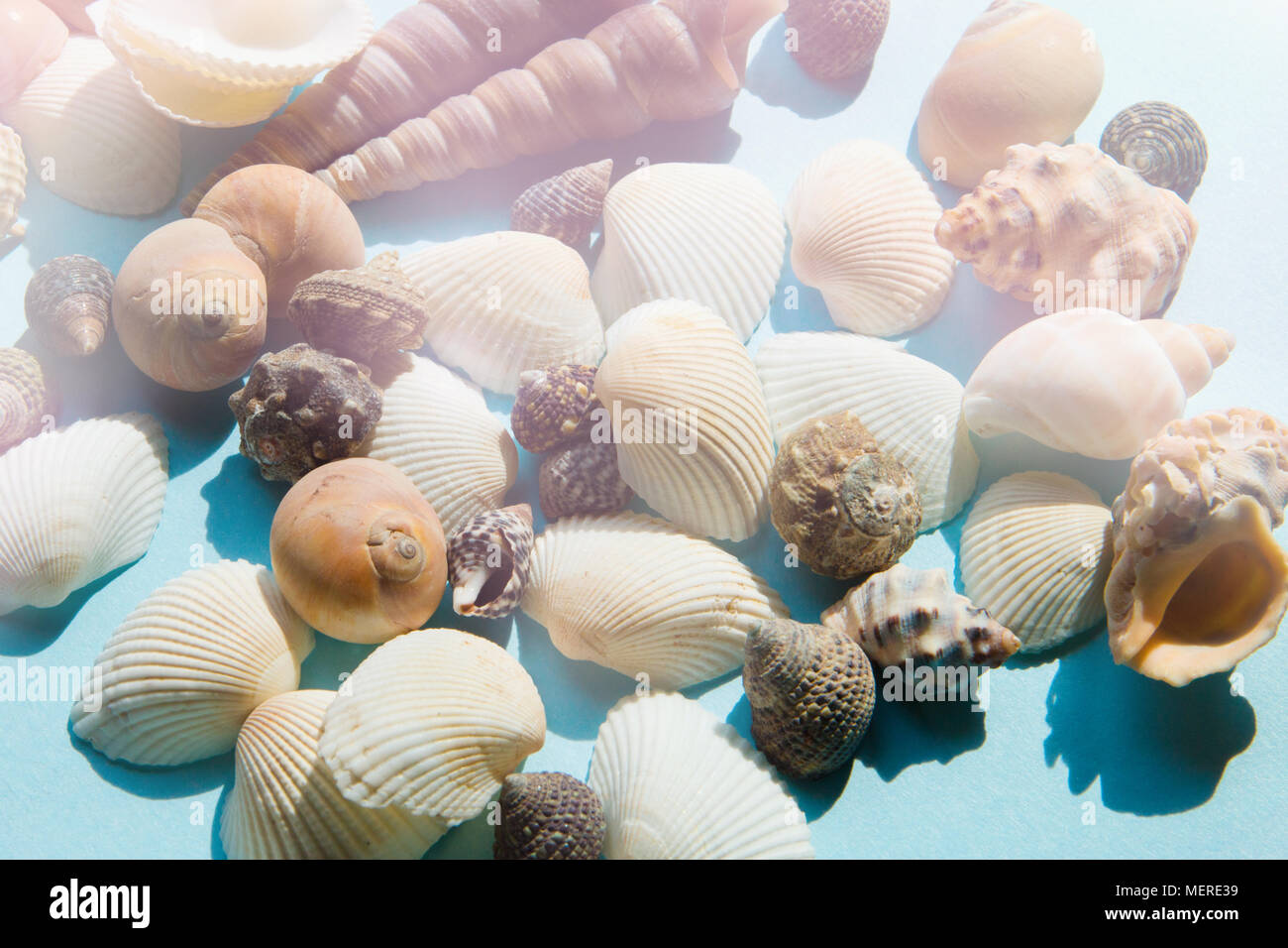 Seashells in sunlight flat lay pattern on blue background, sea vacation background, top view - Stock Image