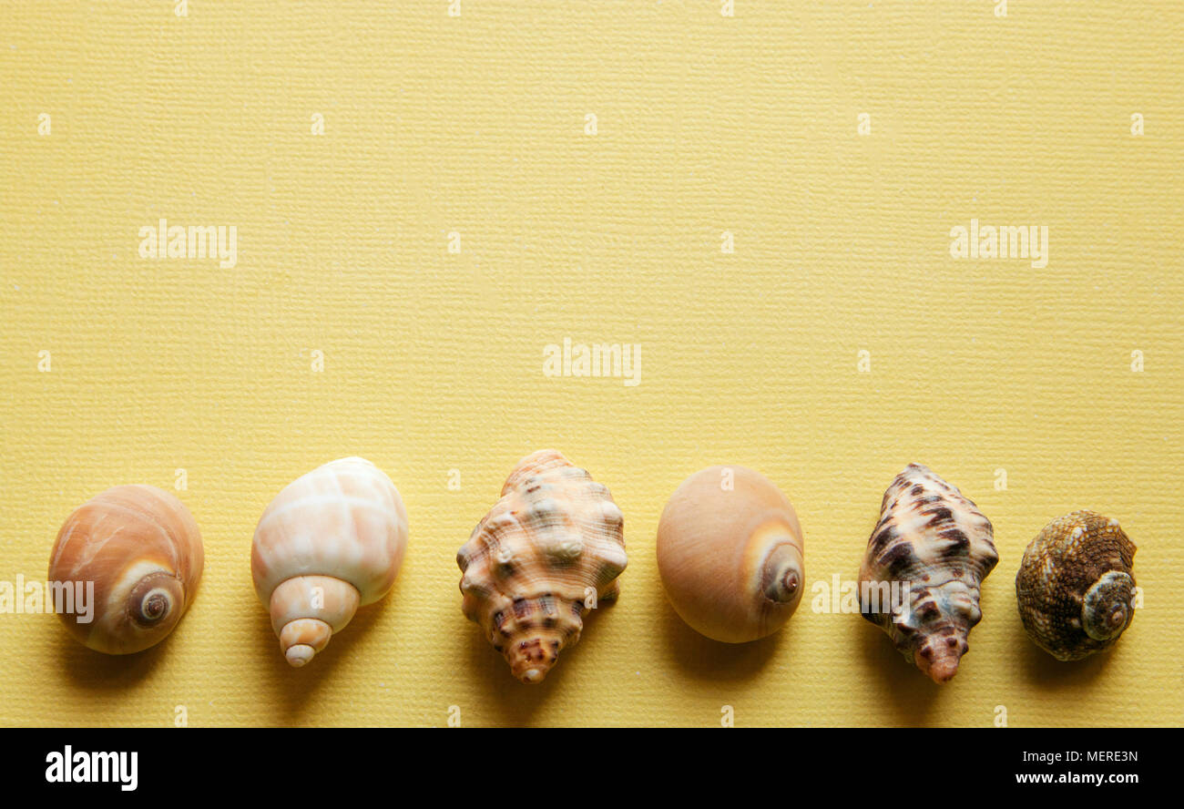 Seashells flat lay pattern on yellow background, sea vacation background with copy space, top view - Stock Image