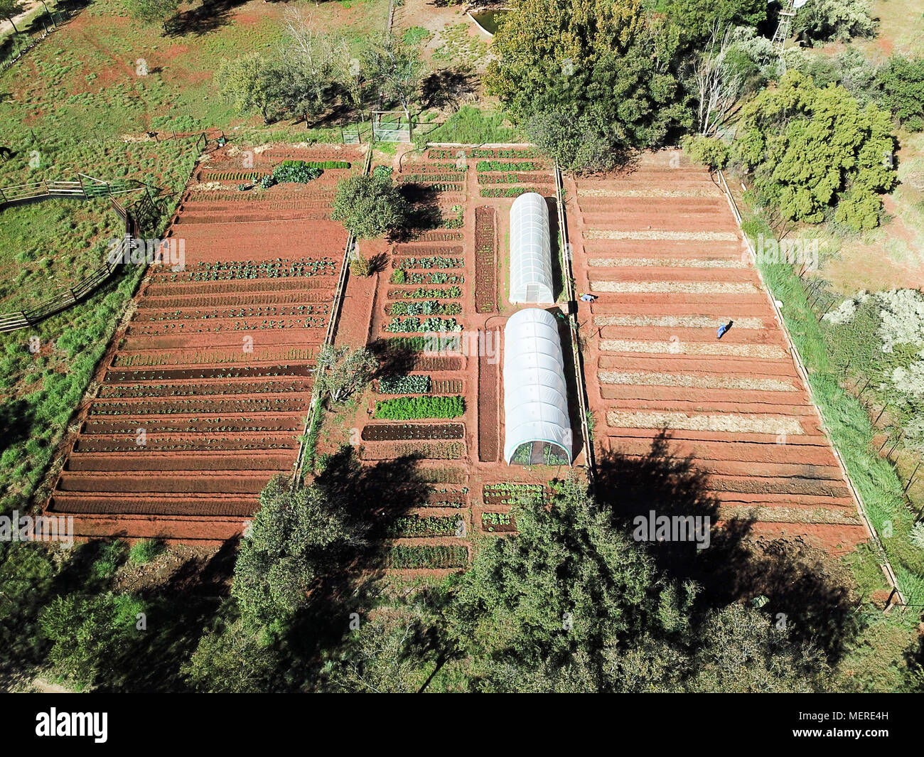 Drone footage rural vegetable garden aerial view of organic vegetable garden - Stock Image