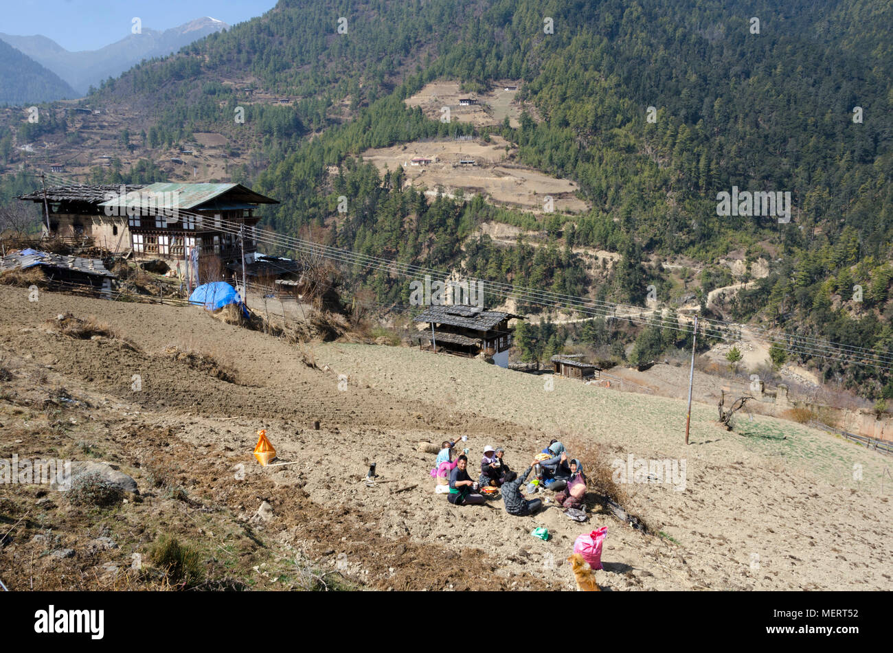 People planting potatoes in field, Haa Valley, Bhutan - Stock Image