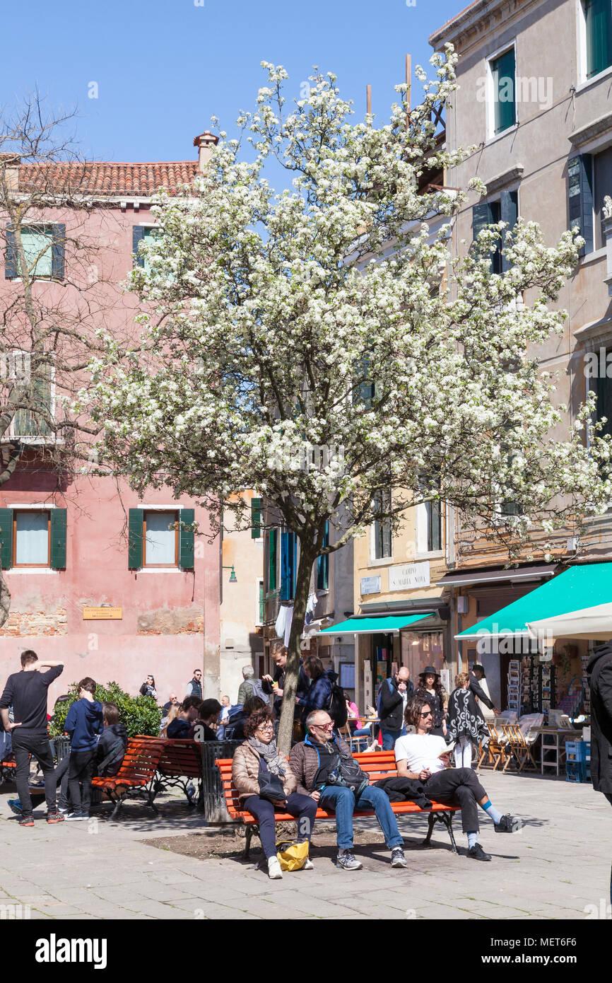 Campo Santa Maria Nova in spring, Cannaregio, Venice, Veneto, Italy with local Venetians relaxing on benches under a tree with blossom - Stock Image