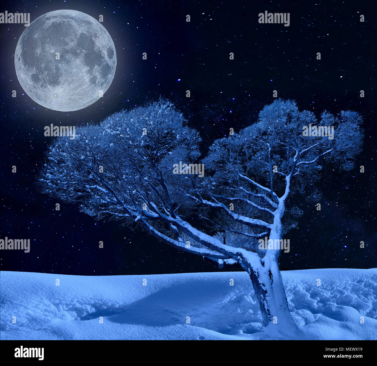 Lonely tree hoarfrost covered in moonlight and twinkle of winter starry night - fairy tale of winter nature - Stock Image