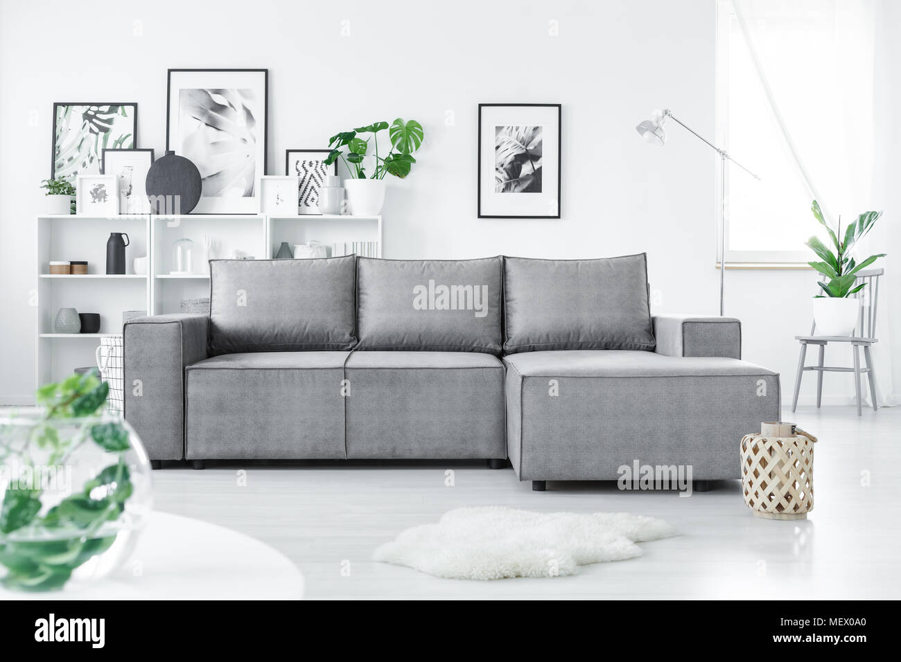 Grey corner sofa standing in white living room interior with fresh ...