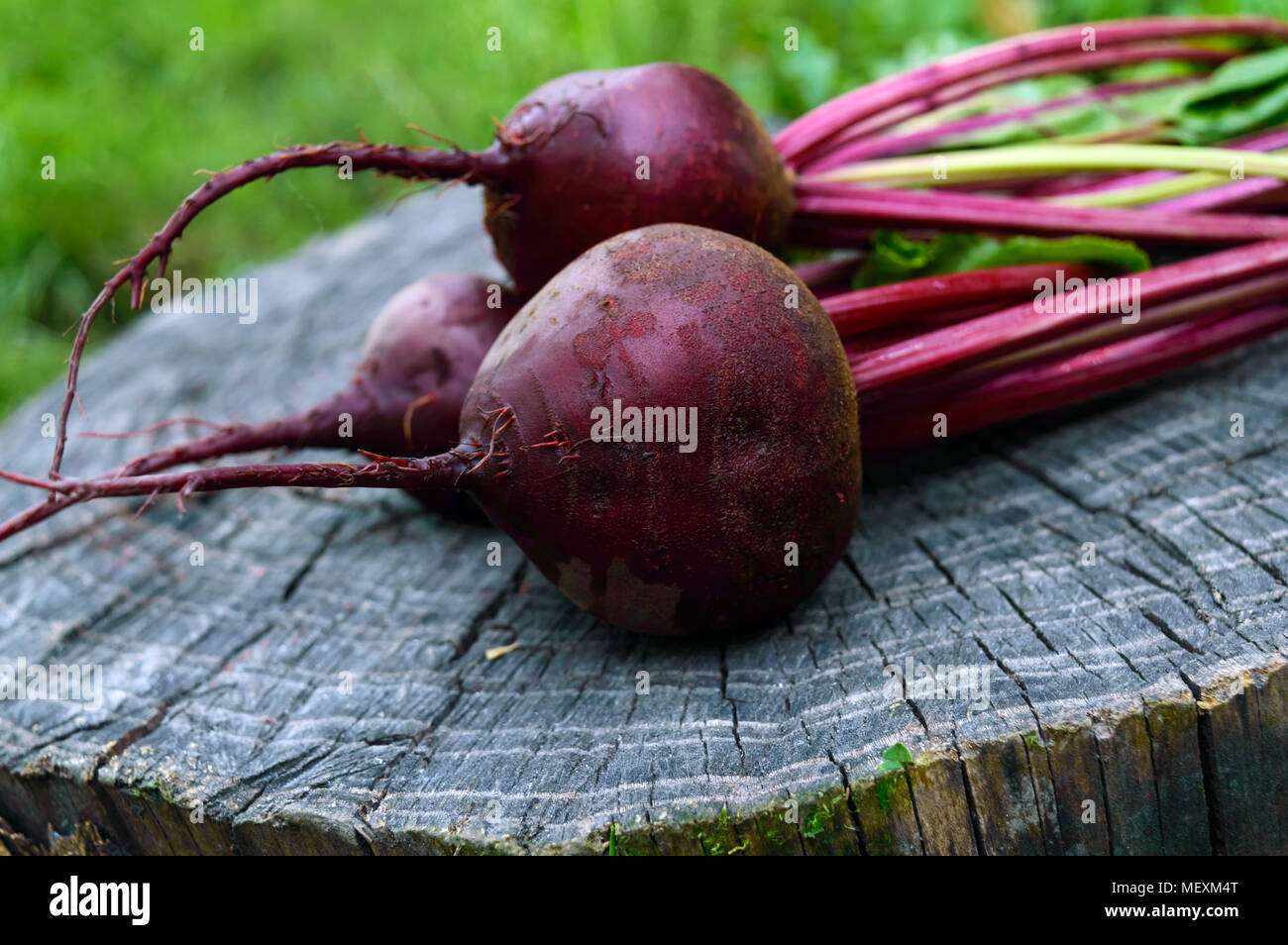 Freshly  beets on an old tree stump. . Stock Photo