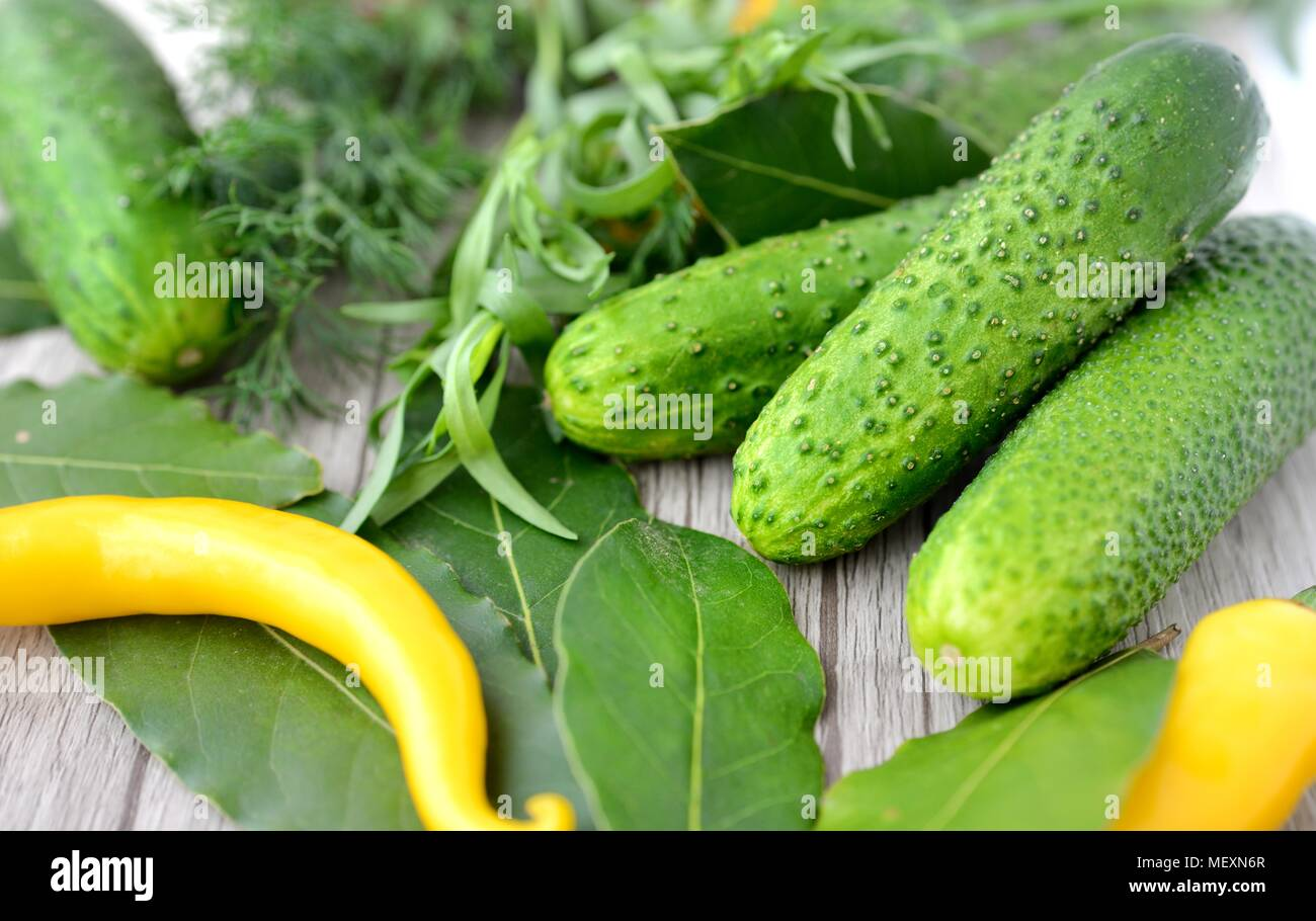 Cucumbers and spices prepared for canning - Stock Image