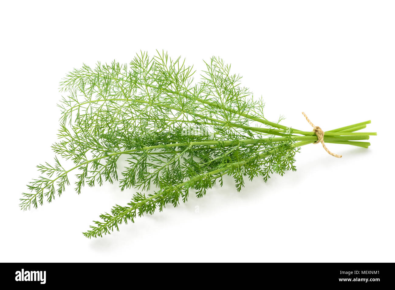 Wild fennel bunch isolated on white background - Stock Image