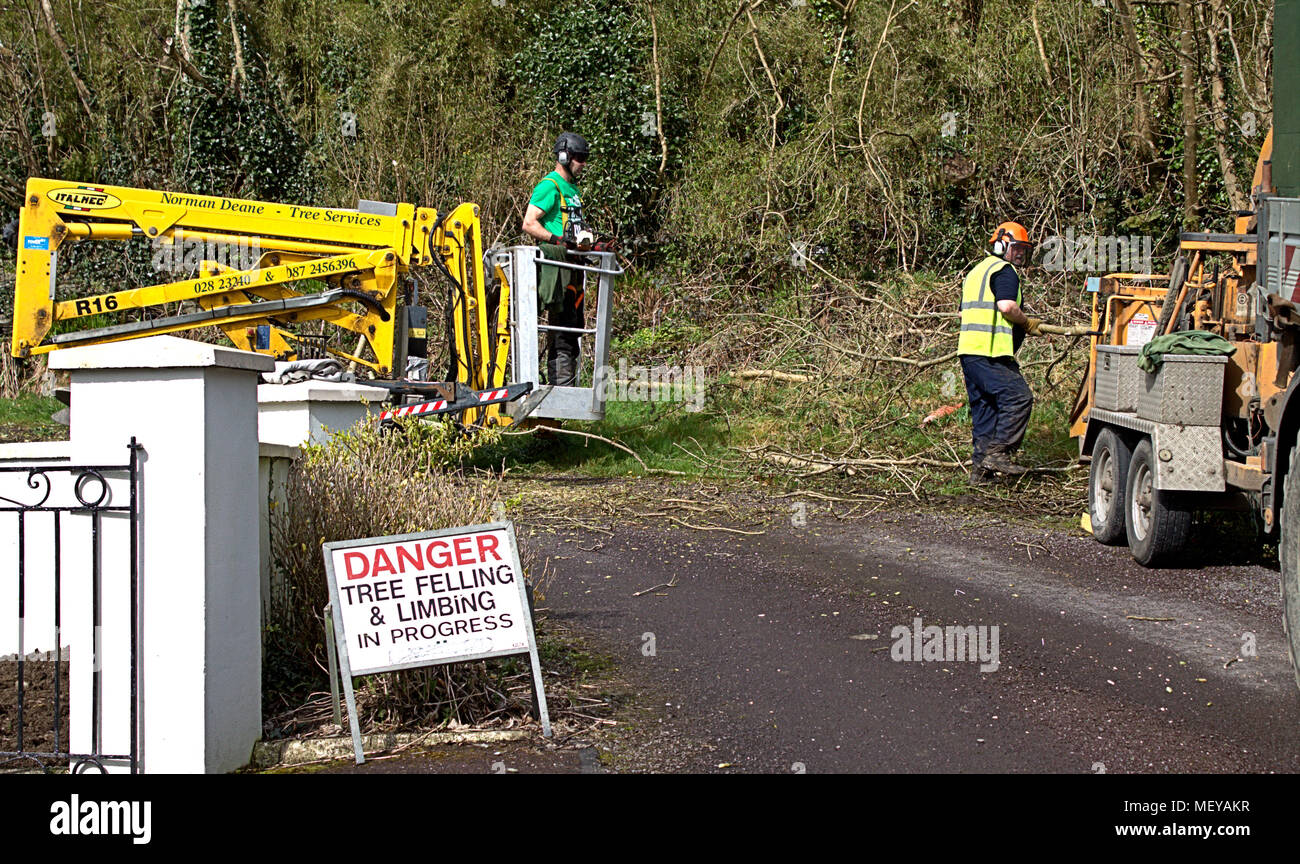 lumberjacks or tree surgeons wearing protective clothing cutting overgrown branches off trees and feeding them into a wood chipper machine, to recycle Stock Photo