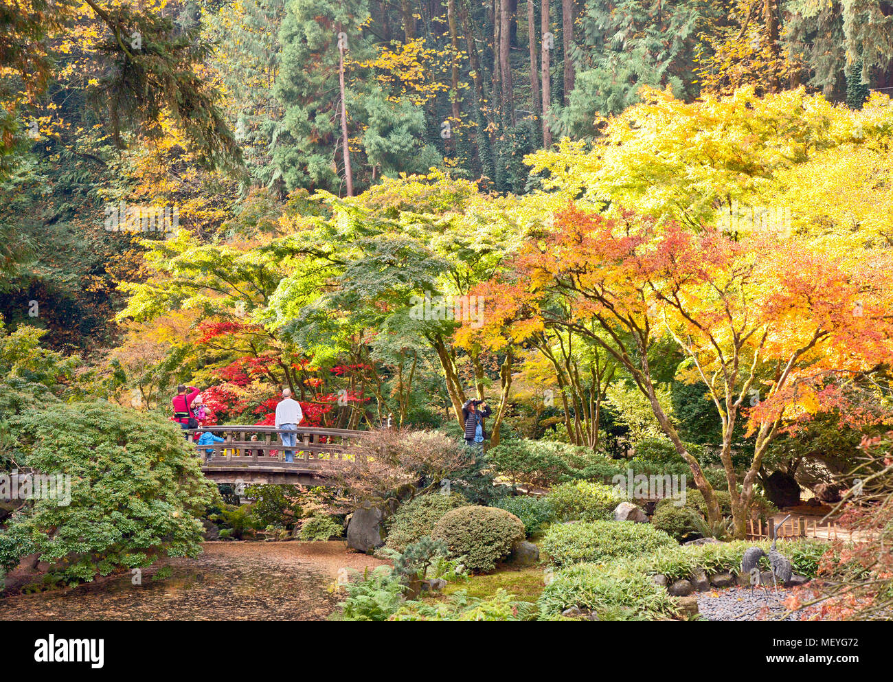 Autumn brings changing color, visitors, and photographers to Portland's famous Japanese Tea Garden. (Colors are natural; not enhanced in Photoshop). - Stock Image