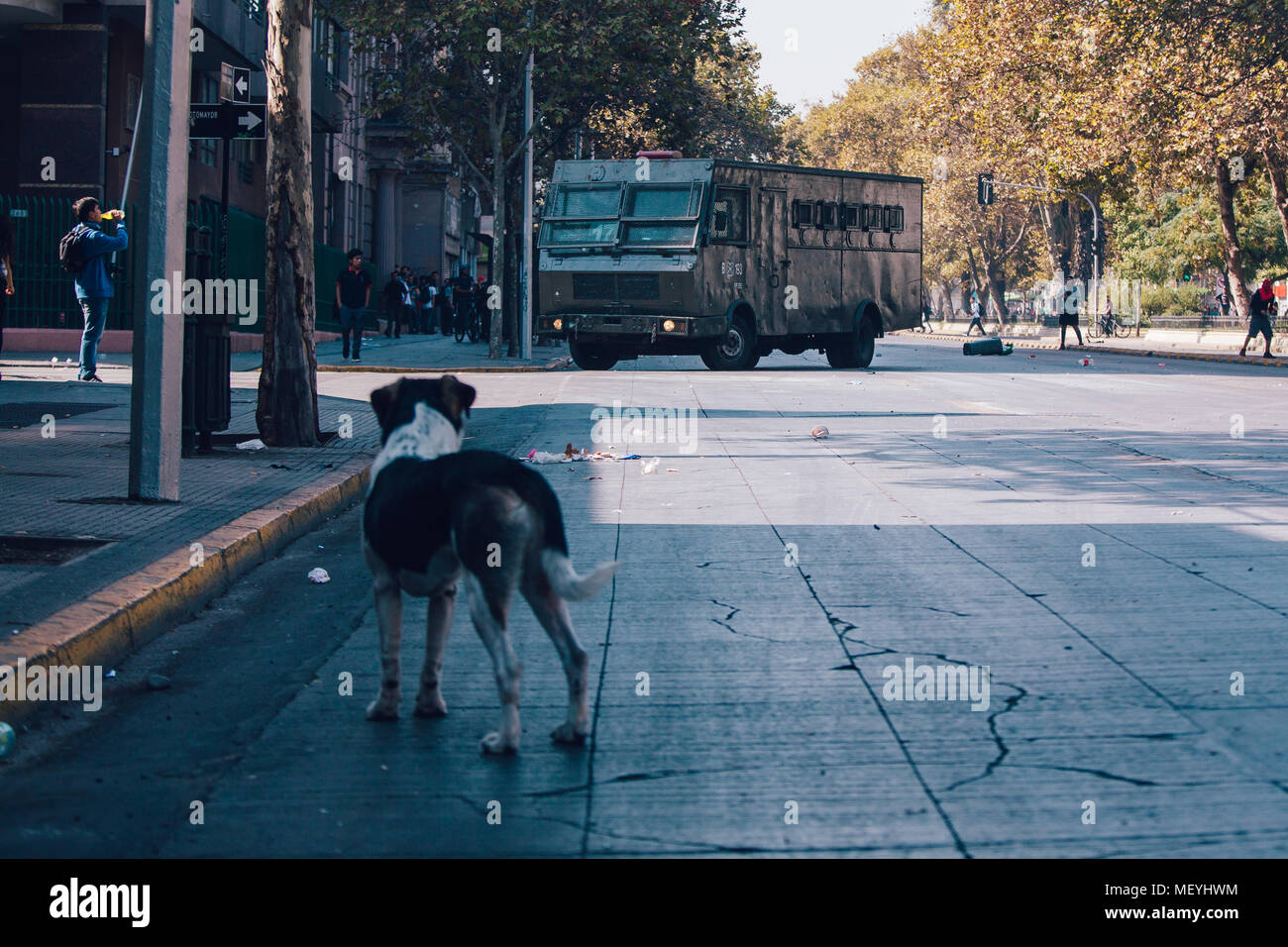 Santiago, Chile - April 19, 2018: dog observes police bus during a demonstration demanding an end to the Profit in the Education. - Stock Image