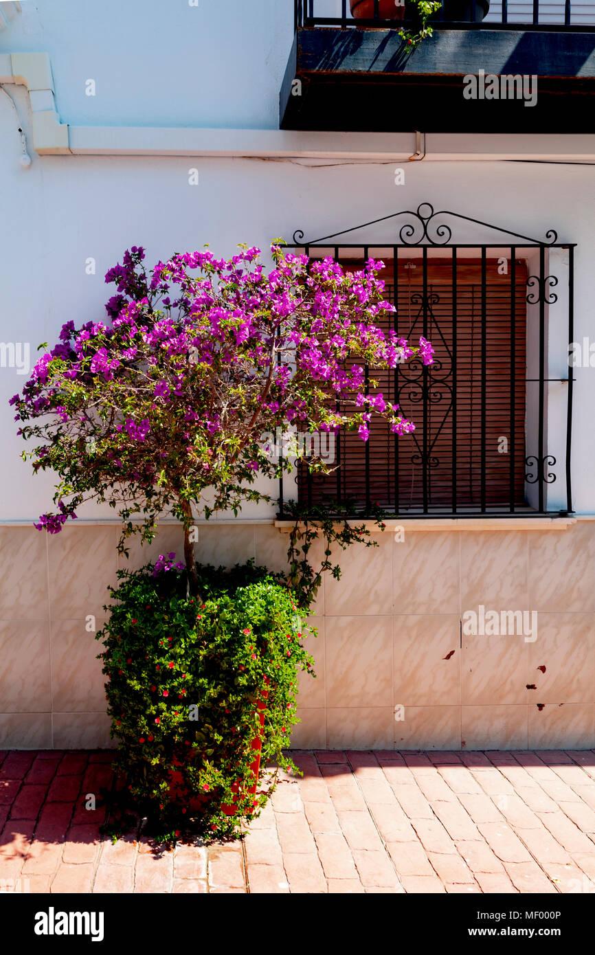 Estepona, Malaga, Spain: A colourful street scene - Stock Image