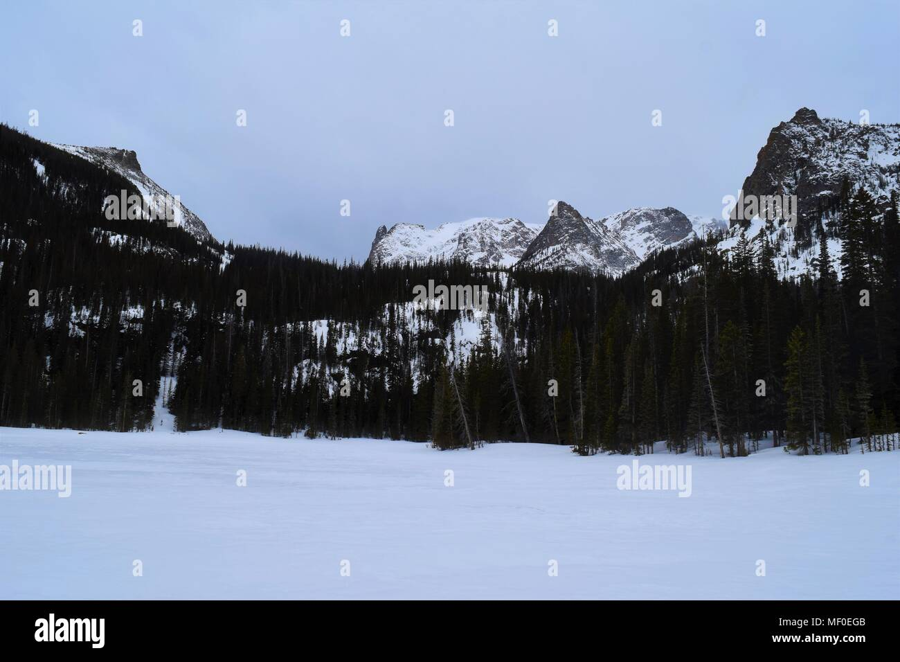 This peaceful winter landscape features a clear sky, forest of evergreen trees, and snow covered mountaintops. Taken in Rocky Mountain National Park. - Stock Image