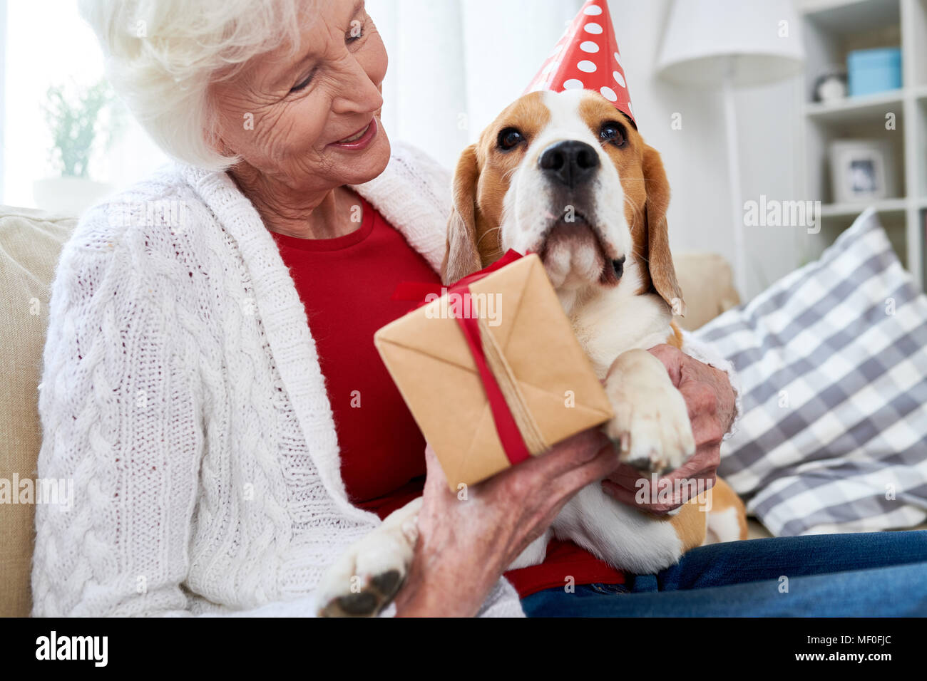 Dogs birthday - Stock Image