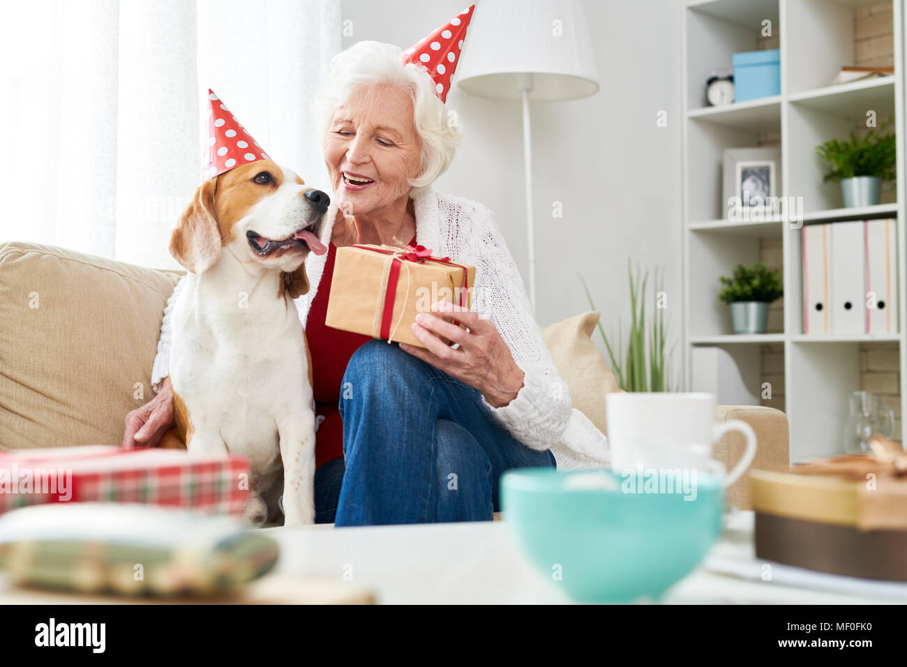 Cheerful senior woman congratulating dog with birthday - Stock Image