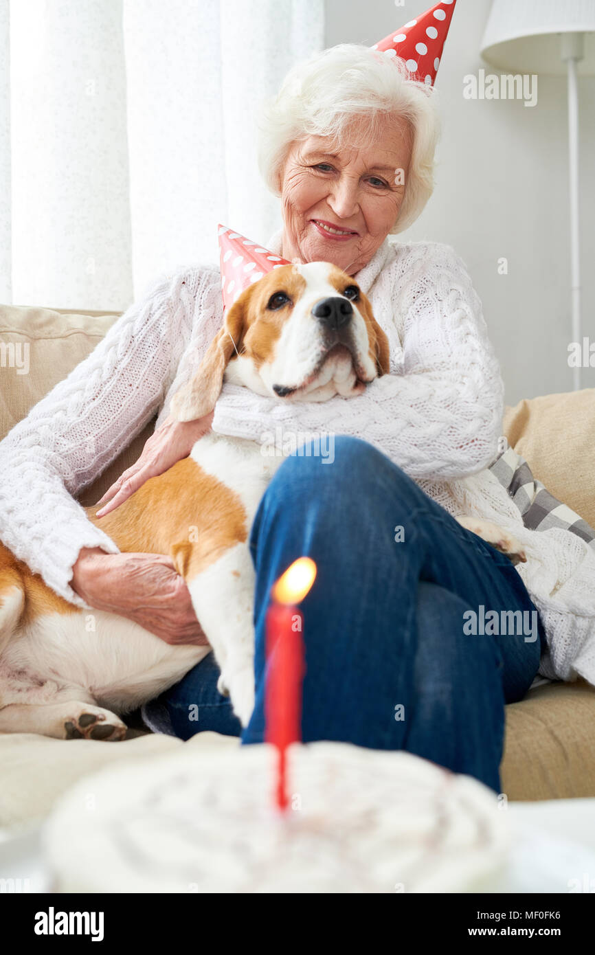First birthday of favorite dog - Stock Image