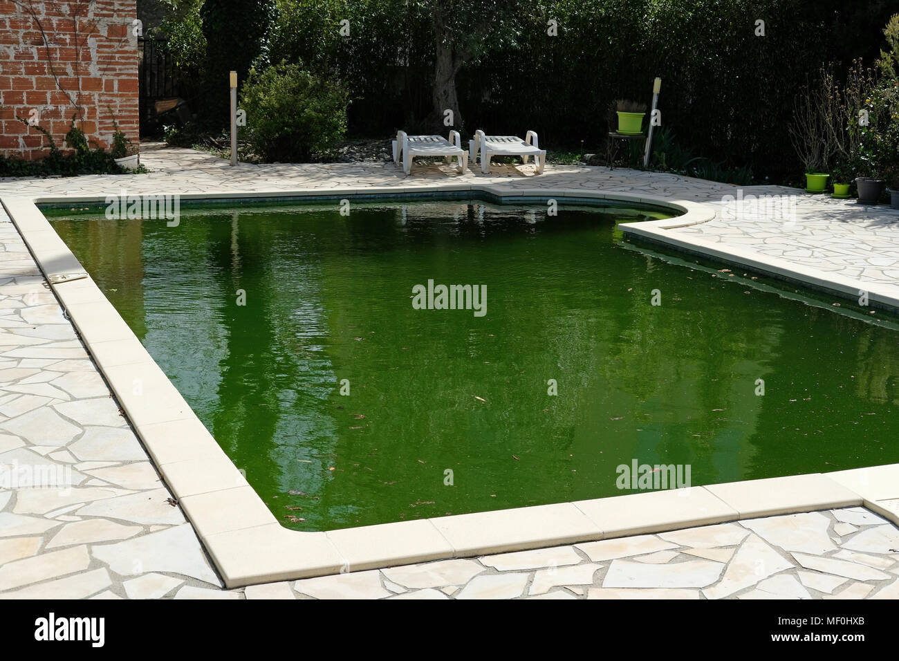 An unclean swimming pool with green water Stock Photo