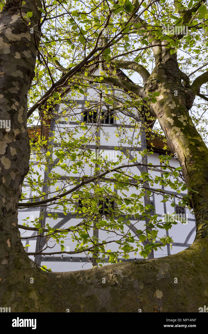 a different and unusual view of shakespeares globe theatre on the south bank of the river thames in london. the globe theatres seen through the trees. - Stock Image