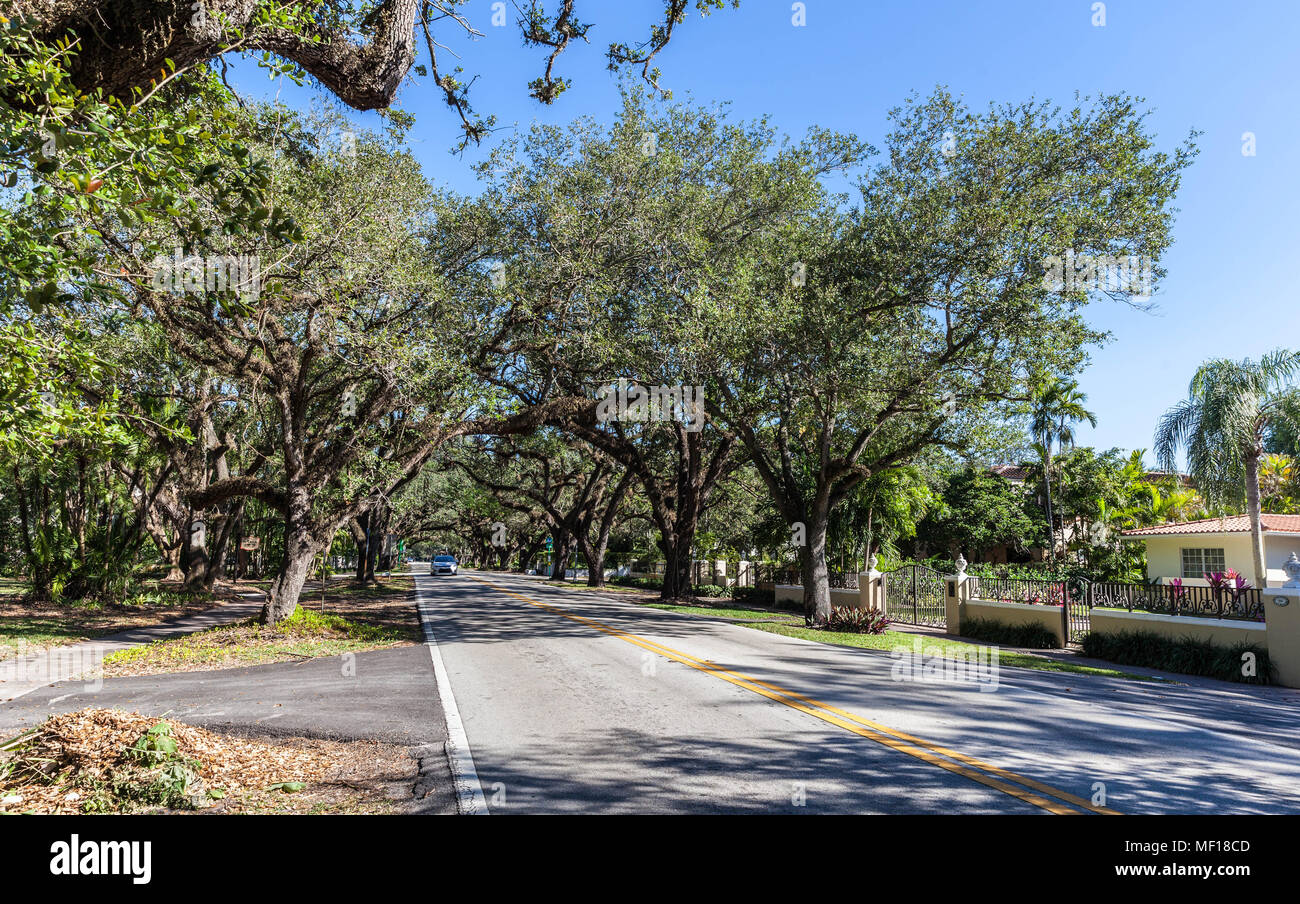 Oak trees along Coral Way, Coral Gable, Miami-Dade County, Florida, USA. Stock Photo
