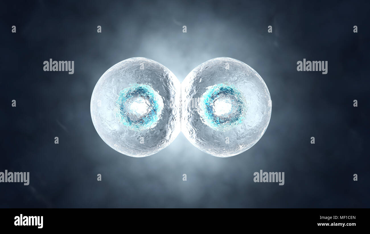 3D rendered illustration of the Mitosis and replication of a generic biological Cell. Stock Photo