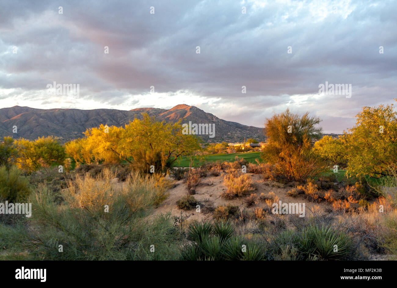 Sunset on the sonoran - Stock Image