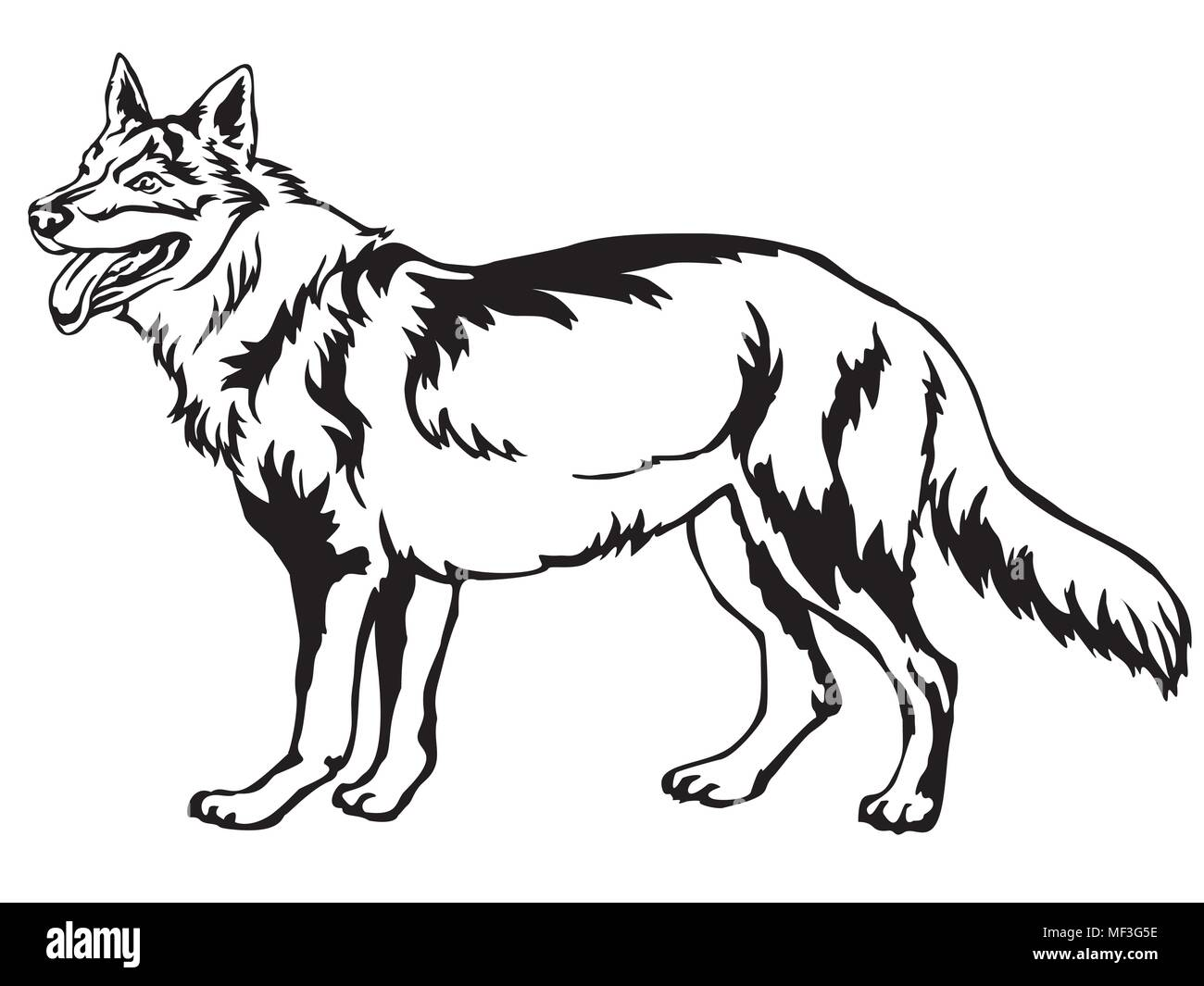Decorative portrait of standing in profile Czechoslovakian Wolfdog, vector isolated illustration in black color on white background - Stock Image