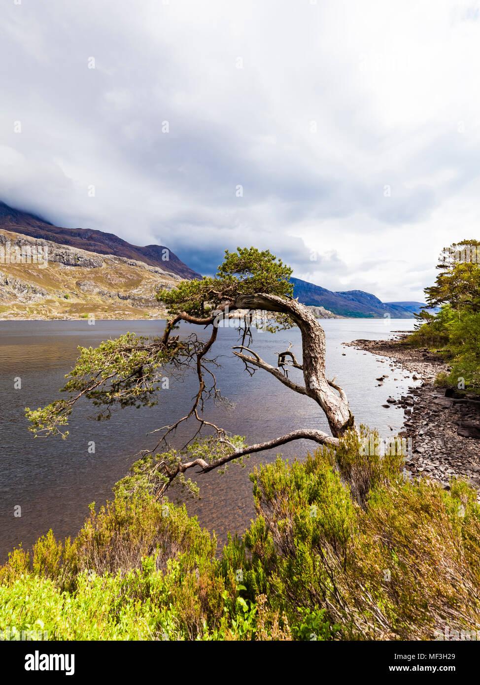United Kingdom, Scotland, Highland, Loch Maree, freshwater lake - Stock Image