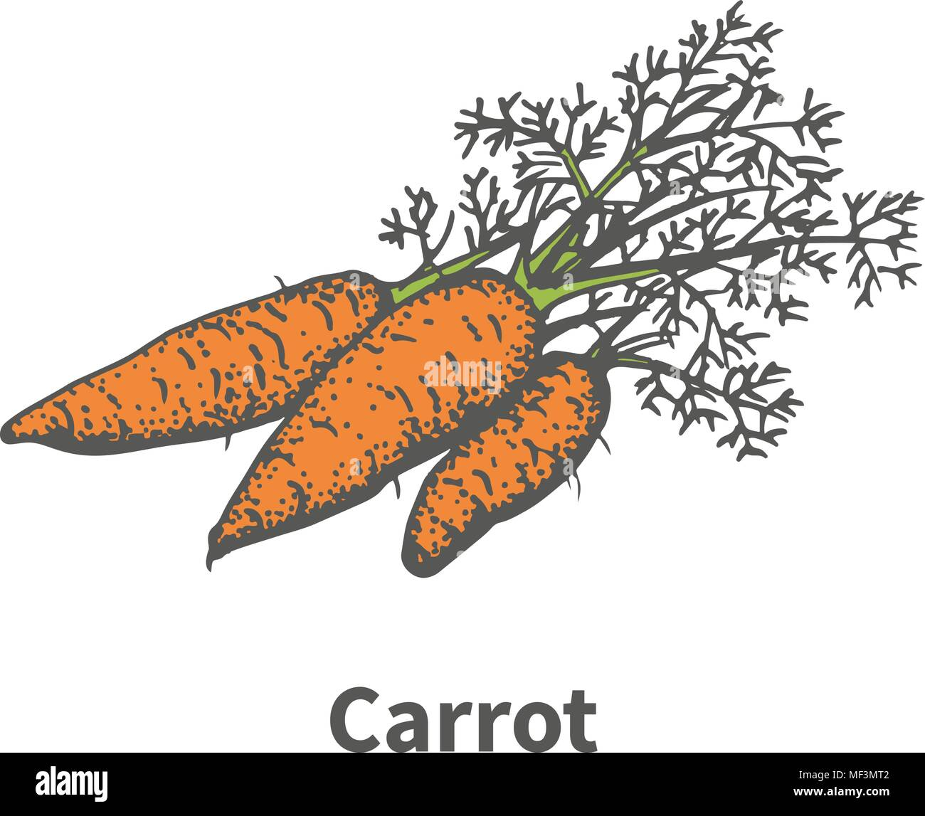 Vector illustration hand-drawn carrots with tops Stock Vector Art