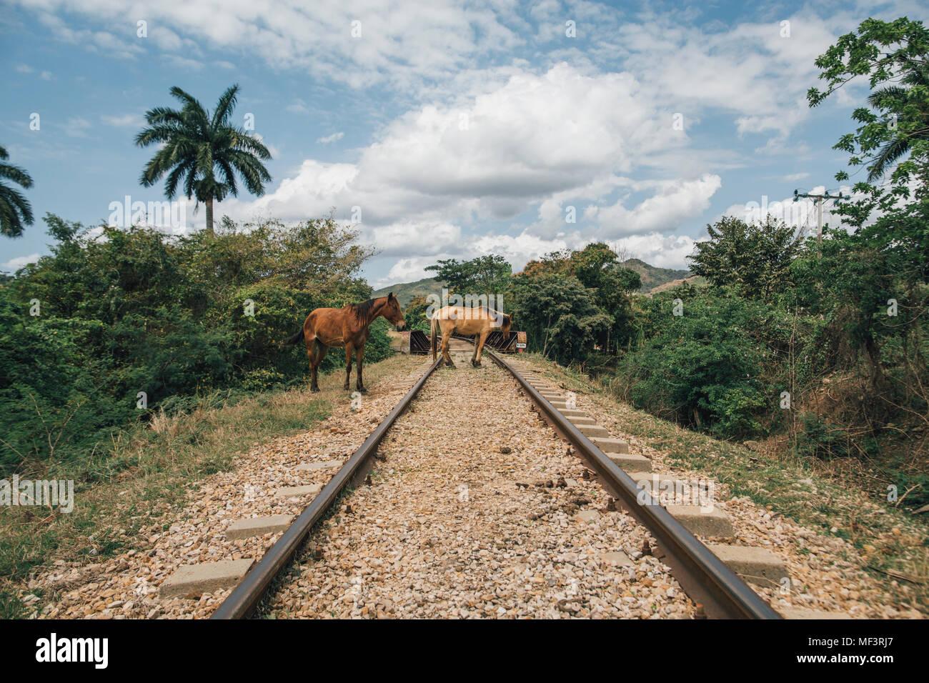 Cuba, Two horses on rail tracks - Stock Image