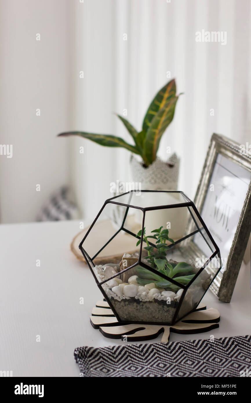 Succulent in metal frame terrarium at home, details of Scandinavian ...