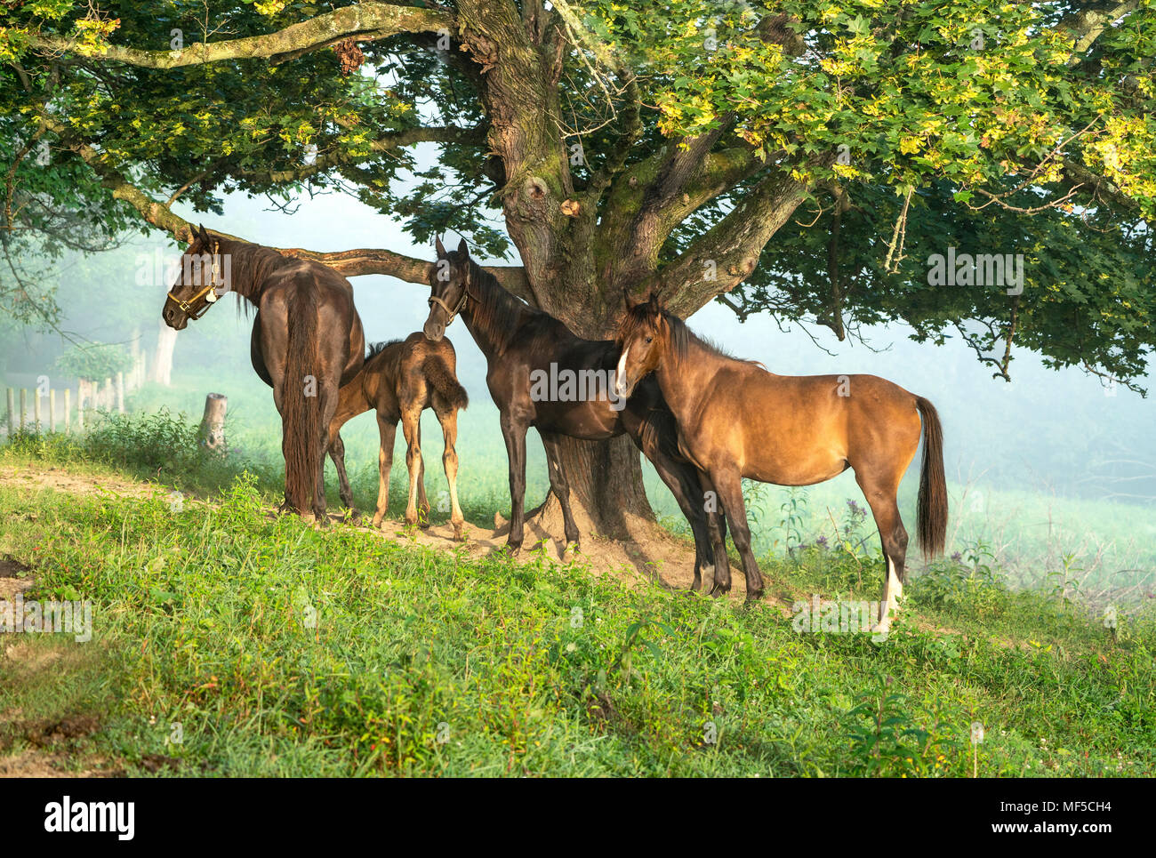 Amish Country Ohio High Resolution Stock Photography And Images Alamy