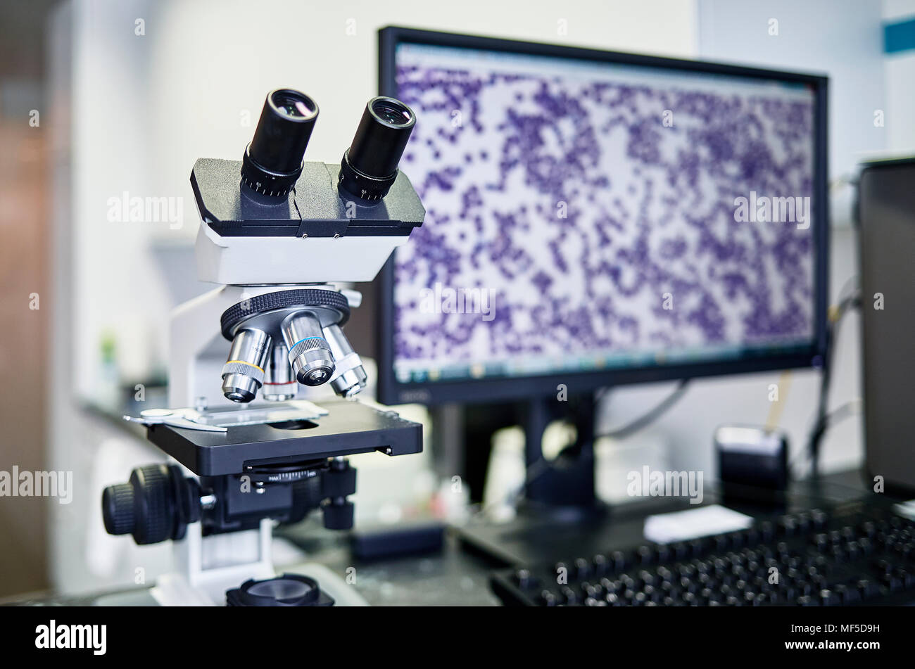 Veterinary practice, microscope and screen - Stock Image
