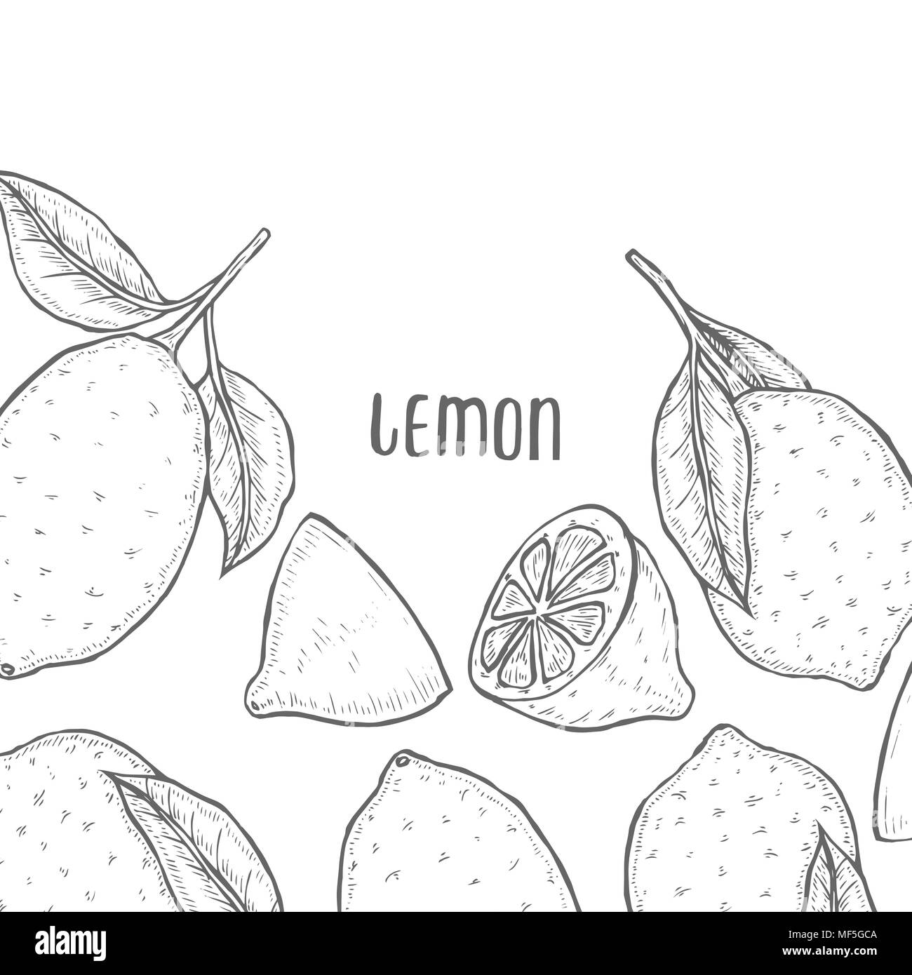Vector oranges hand drawn sketch. Sketch vector food lemon illustration. Vintage style - Stock Image