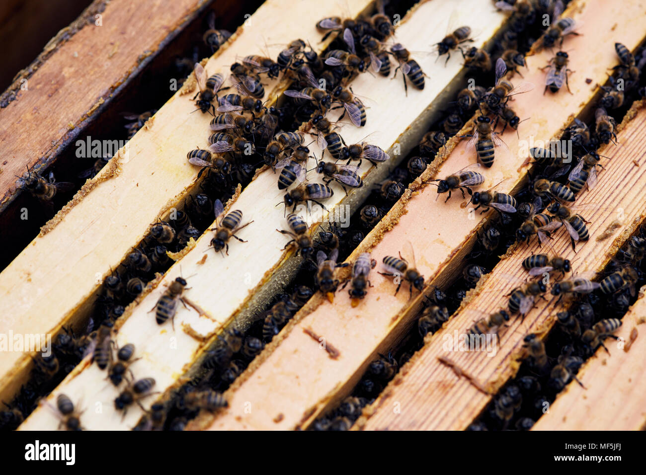 Apiary Hive Background - Stock Image