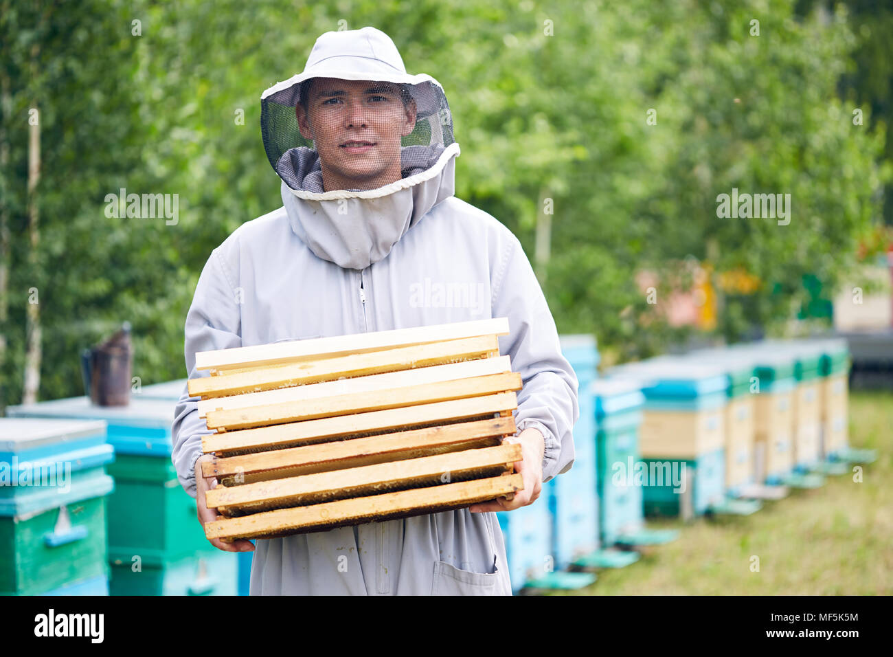 Young Worker in Apiary - Stock Image