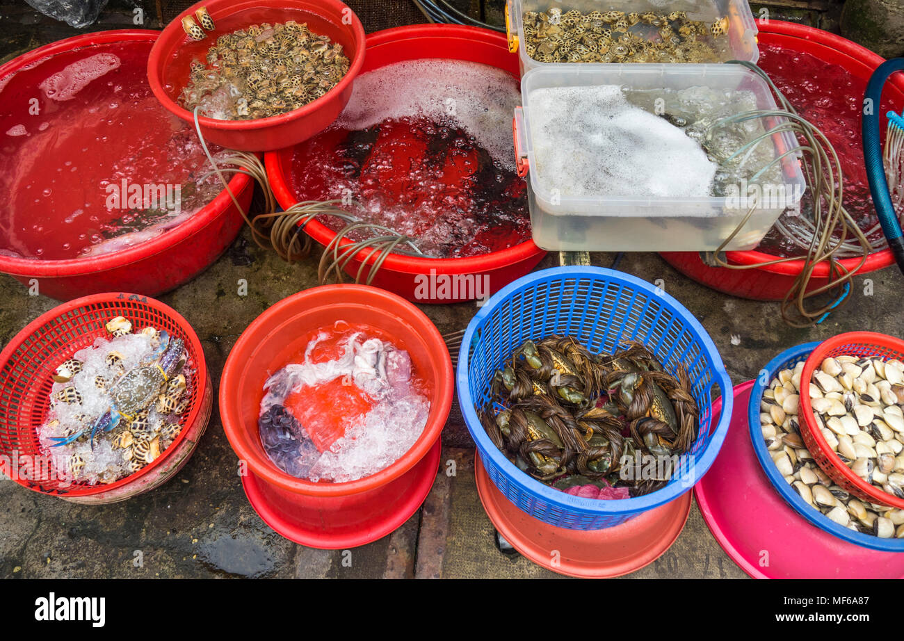 Buckets of sea snails, squid, and crabs in a seafood market stall in the Ton That Dam Street markets, Ho Chi Minh City, Vietnam. - Stock Image