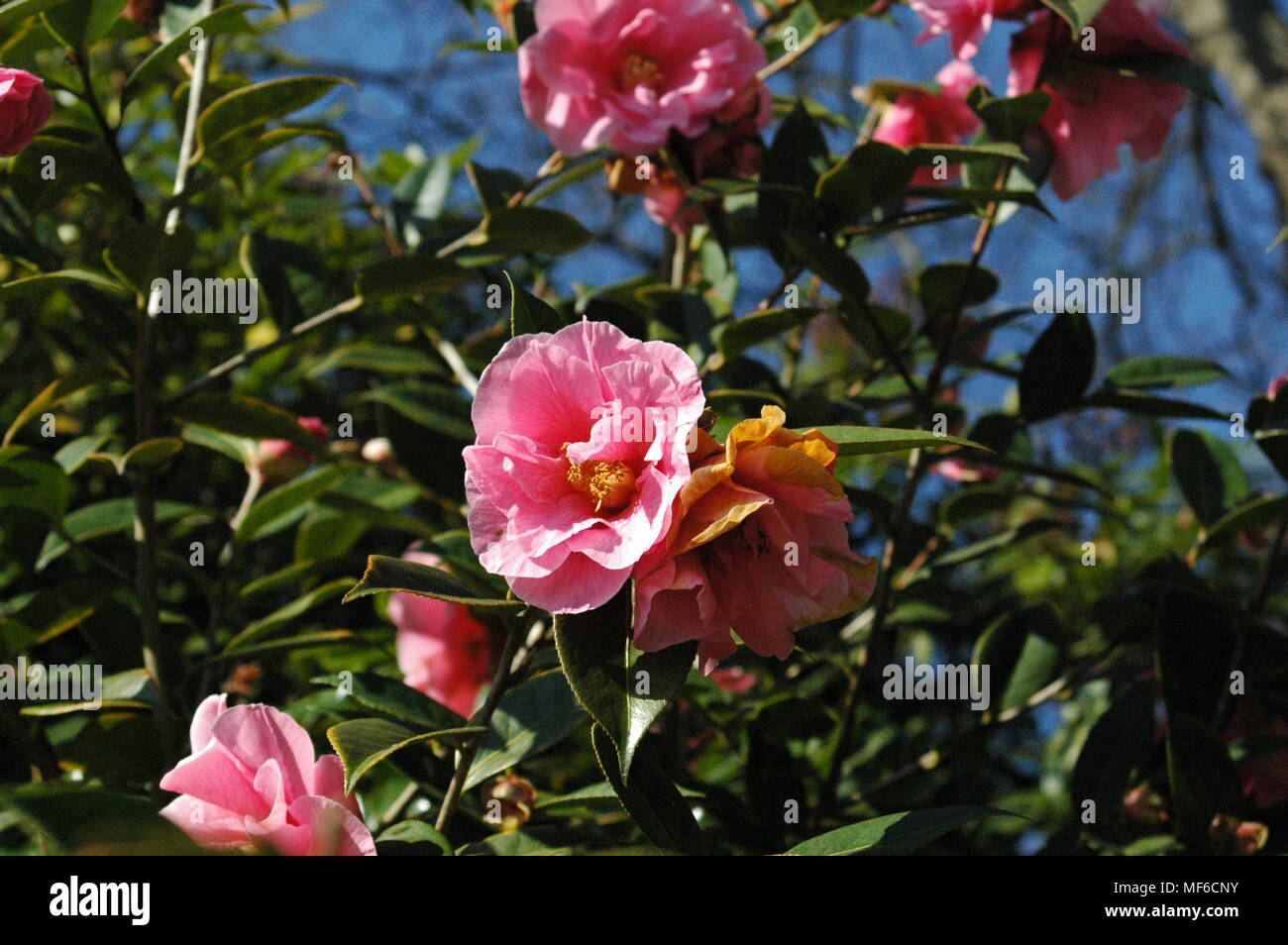 Lovely Pink Flowers Stock Photo 181465255 Alamy