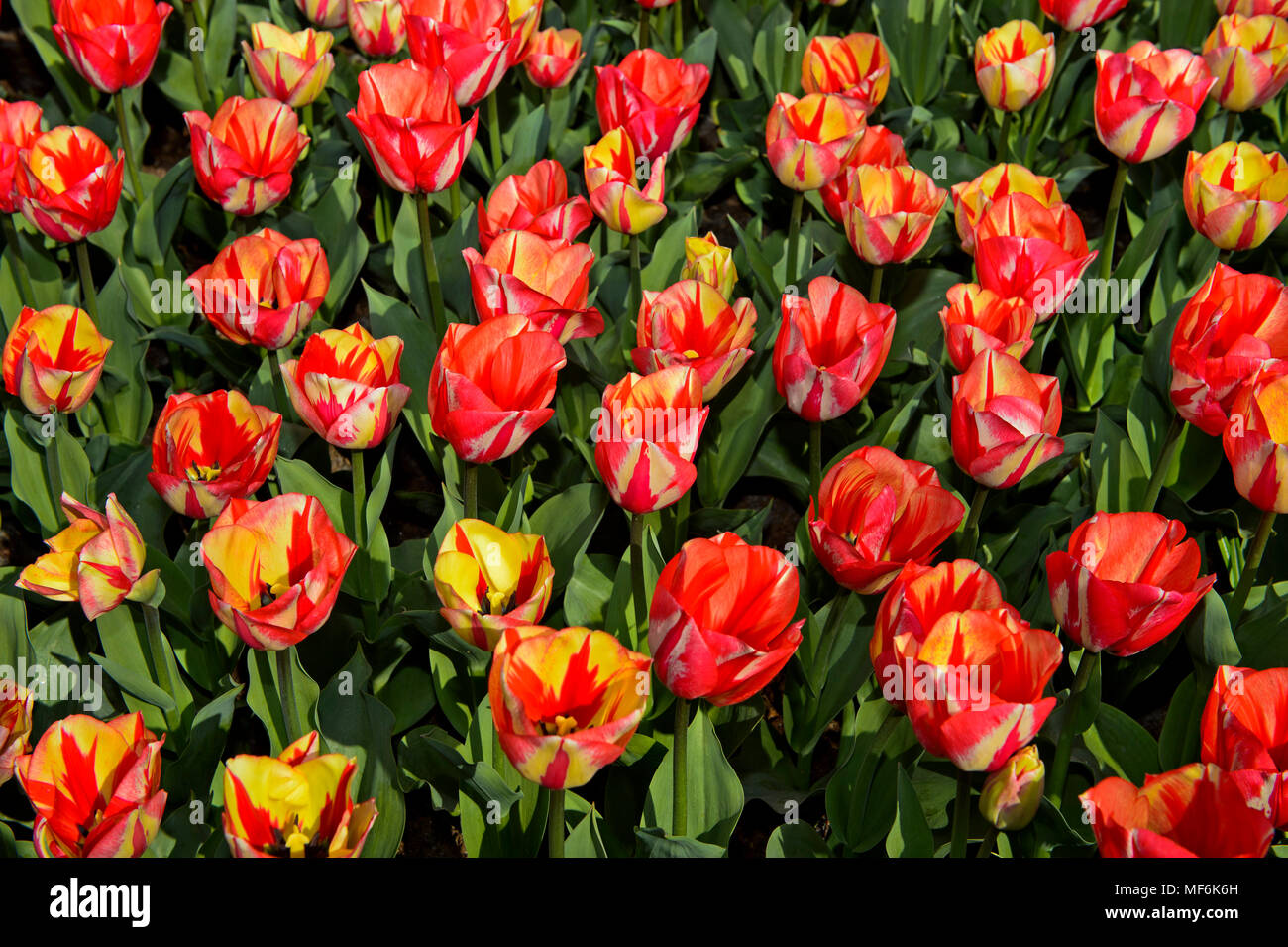 Salmon Colored Flowers Stock Photos & Salmon Colored Flowers Stock ...