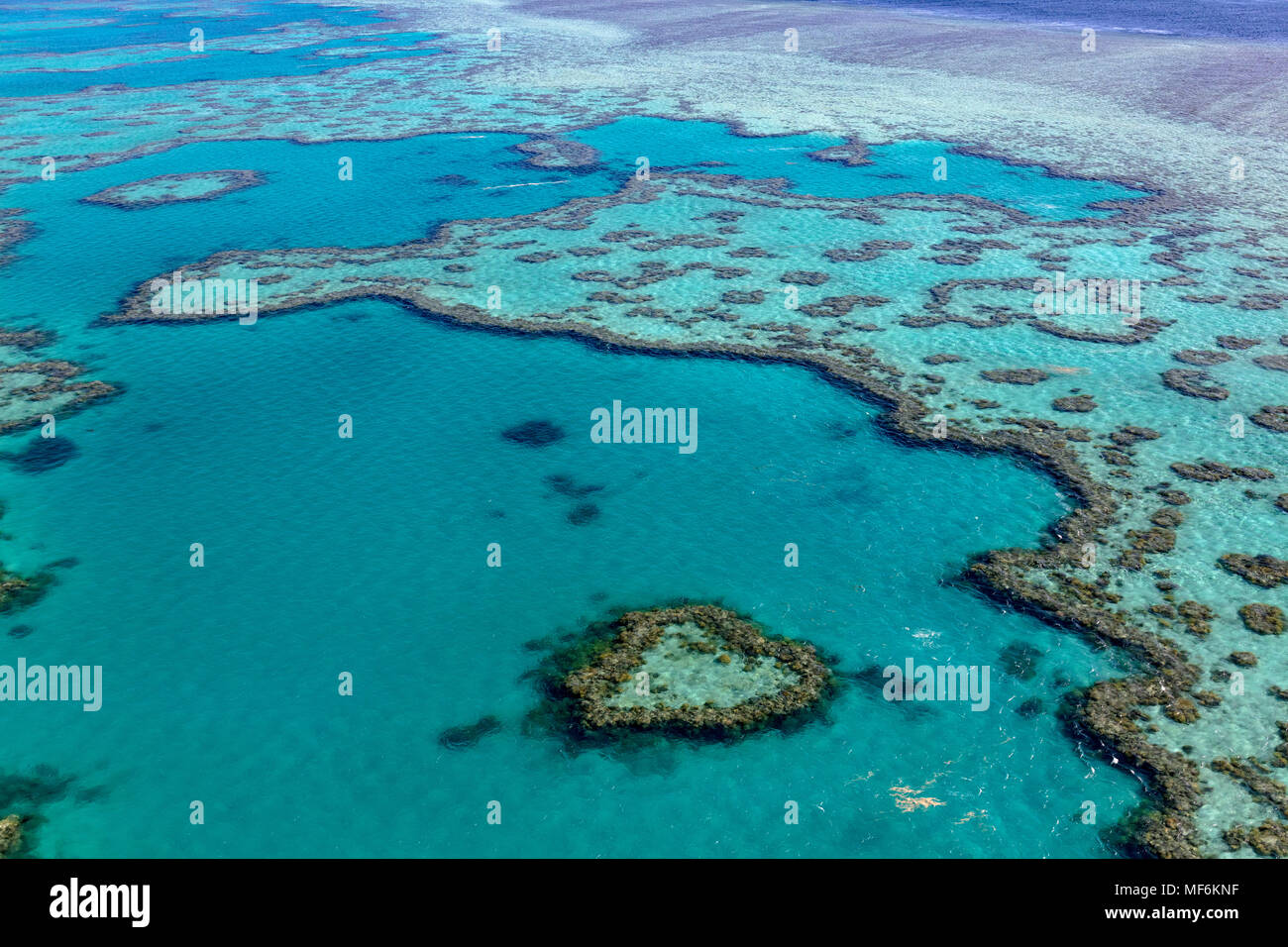 Coral Reef, Heart Reef, part of Hardy Reef, Outer Great Barrier Reef, Queensland, Australia - Stock Image