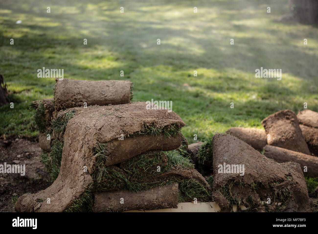 Grass Turfs Rolls On The wooden Pallet Preparing To New Grass Installation On Foggy Background - Stock Image