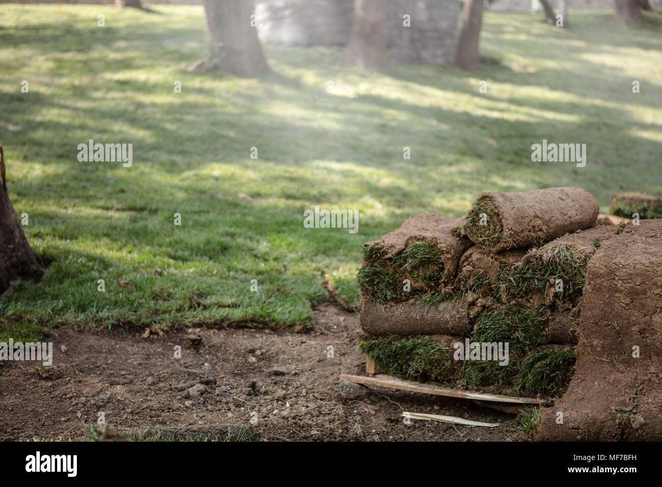 New green turf grass rolls stacked in a pile on wooden pallets ready